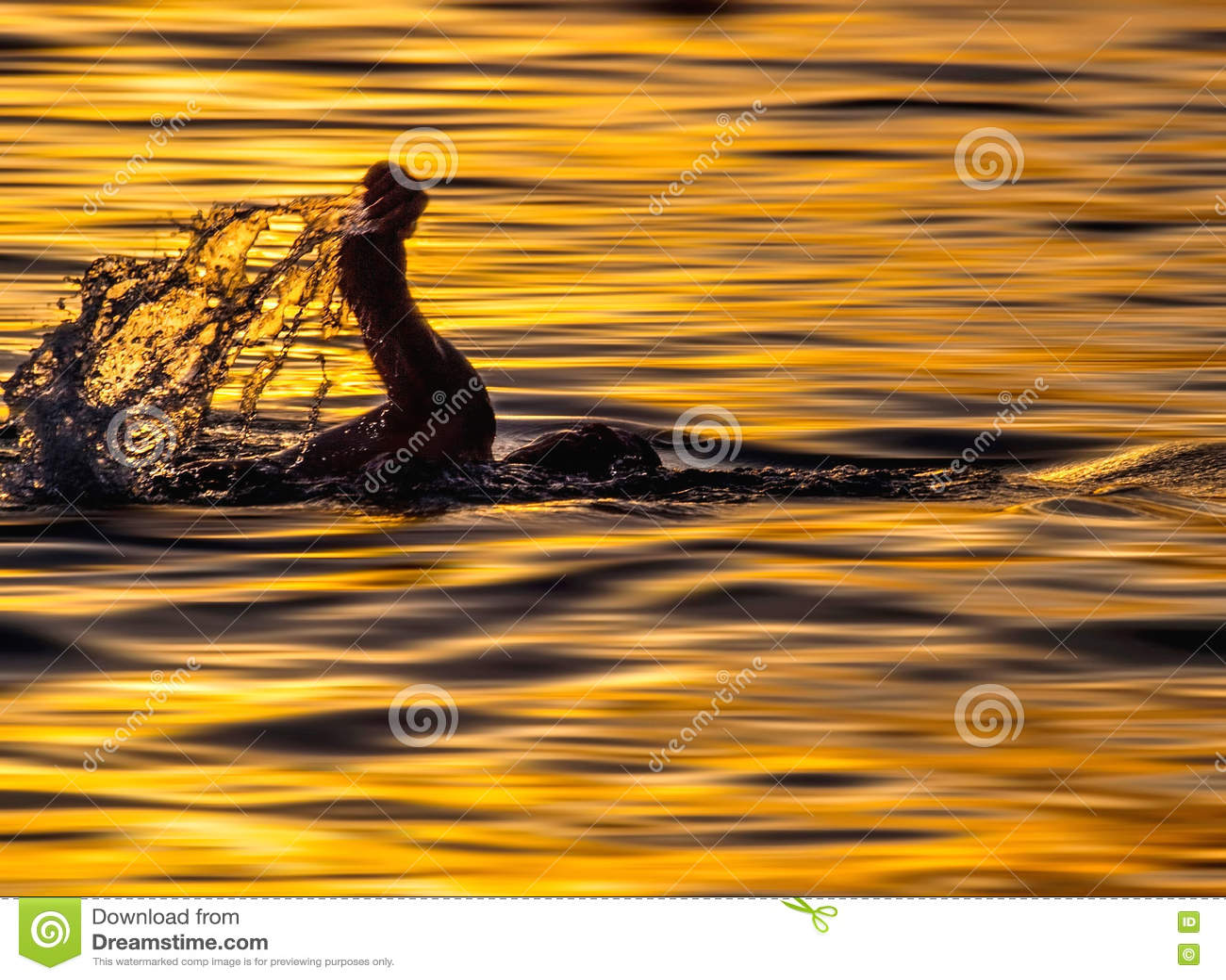 Nadador no por do sol