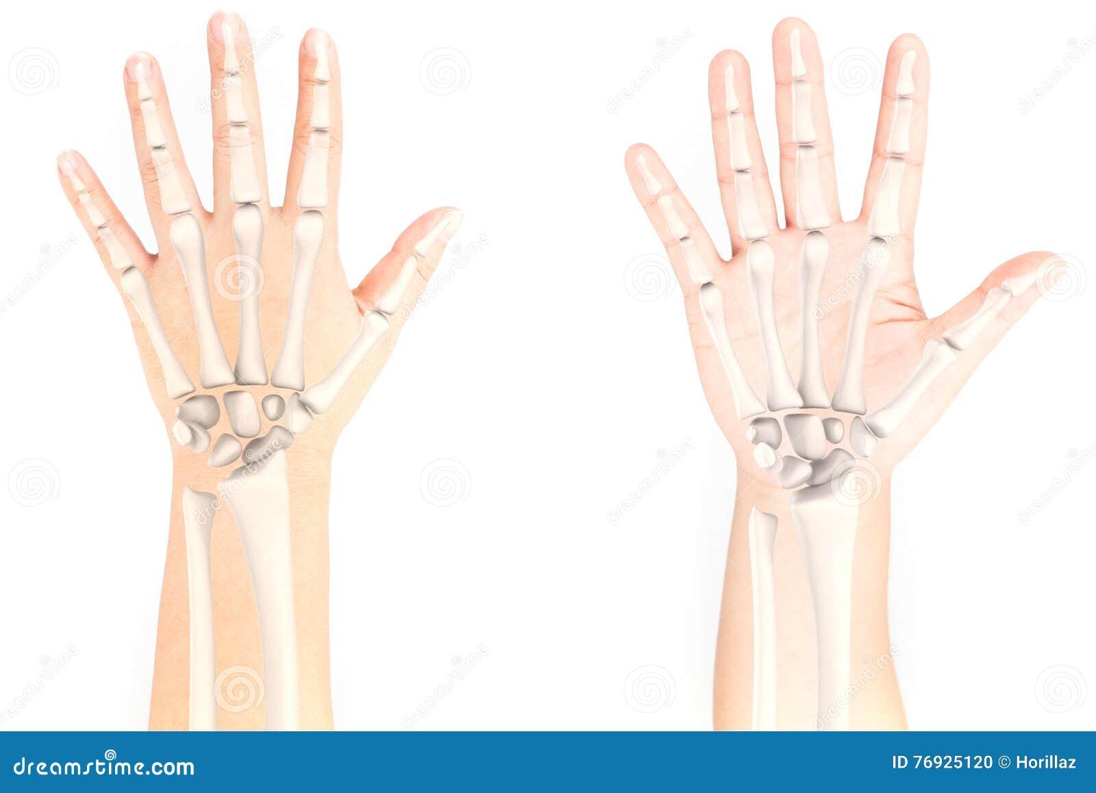 Nadgarstek kość