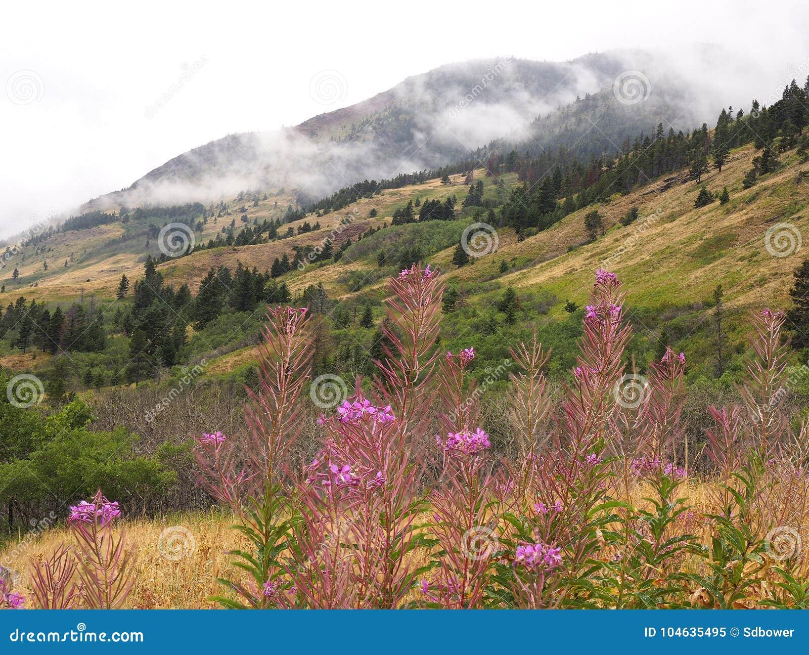 Download Nadruk Gestapeld Beeld Van Brandonkruid En Bergachtergrond Stock Afbeelding - Afbeelding bestaande uit bloemen, genaturaliseerd: 104635495