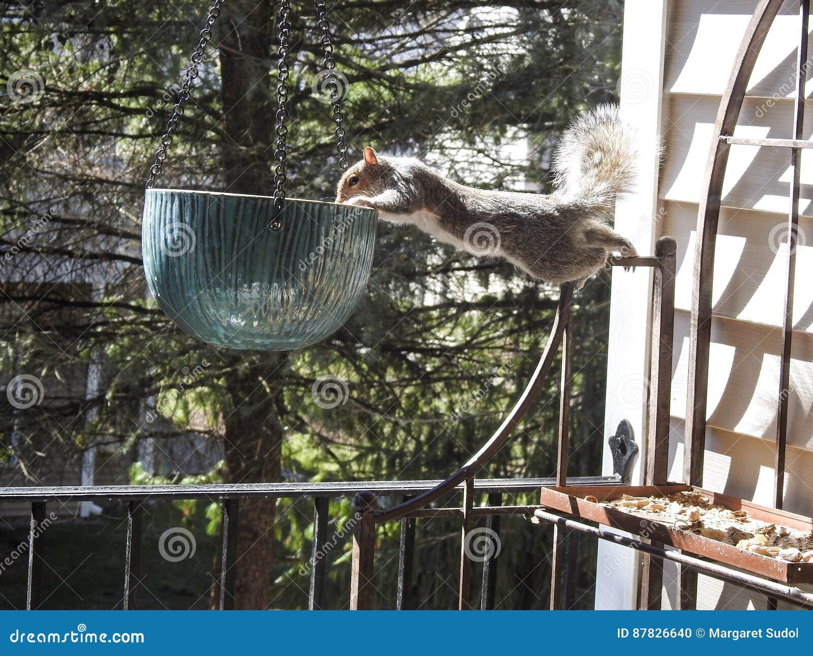 Nadużytego równoważenia obwieszenia Popielaty Wiewiórczy Śledczy Ceramiczny garnek na pokładzie