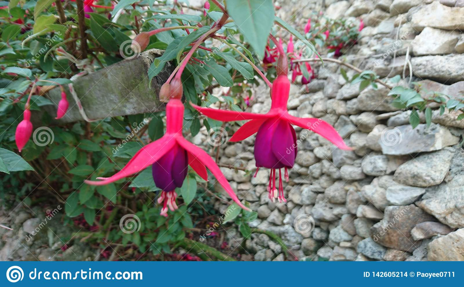 Nadzwyczajna i specjalna orchidea
