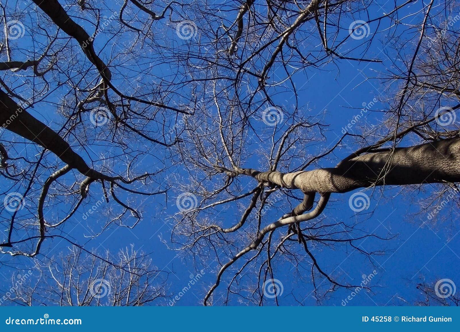 Naga drzewo zimy.
