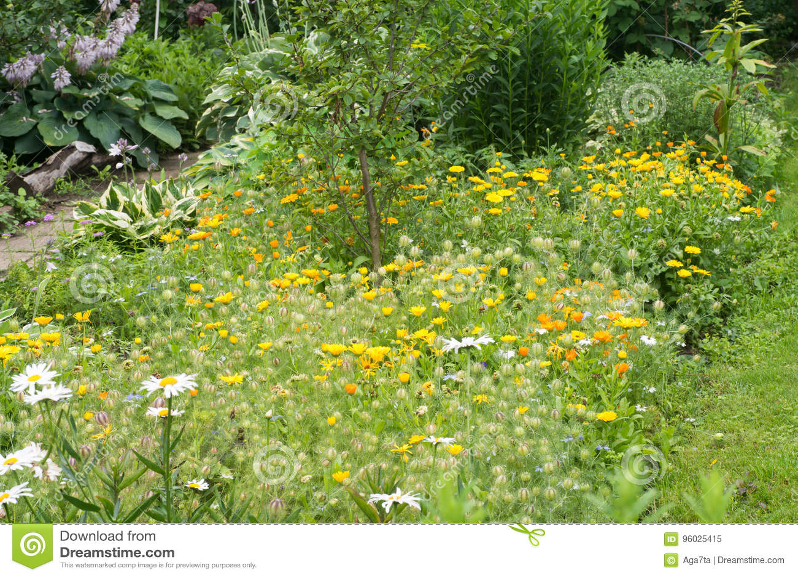Nagietków kwiaty w chałupa ogródzie