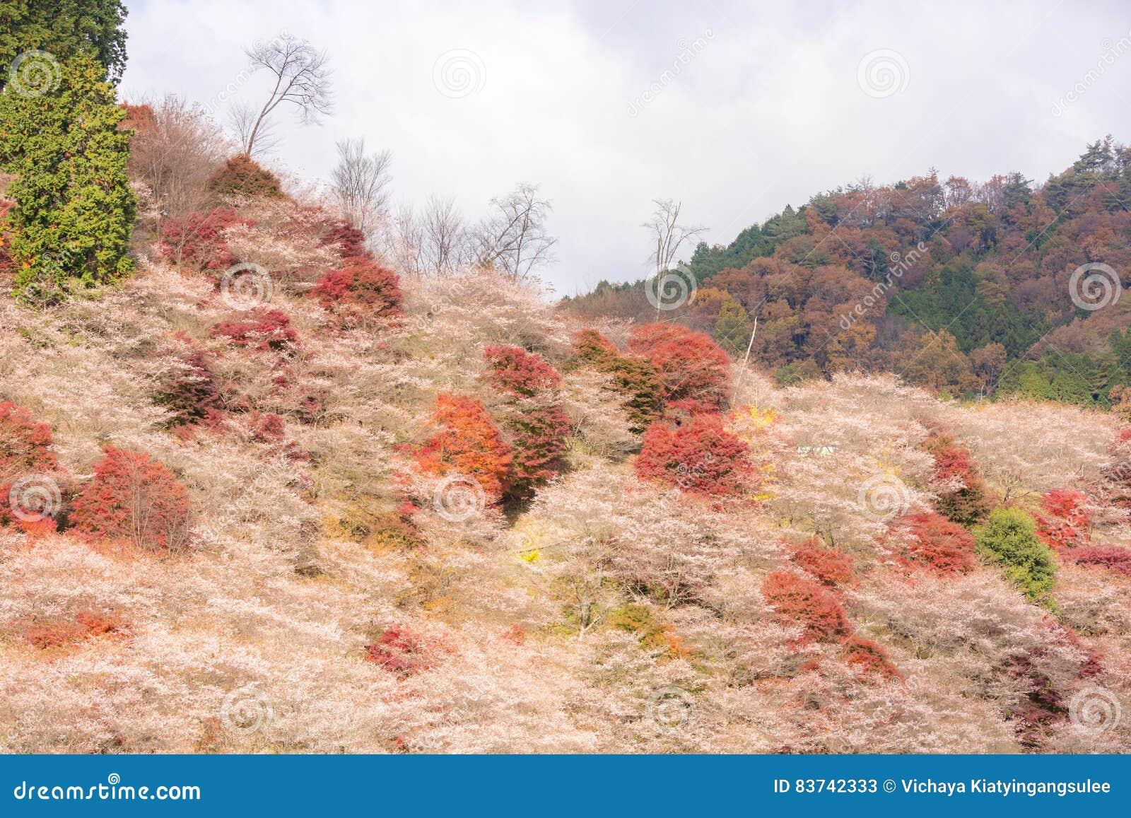 Nagoya, Obara Kirschblüte im Herbst