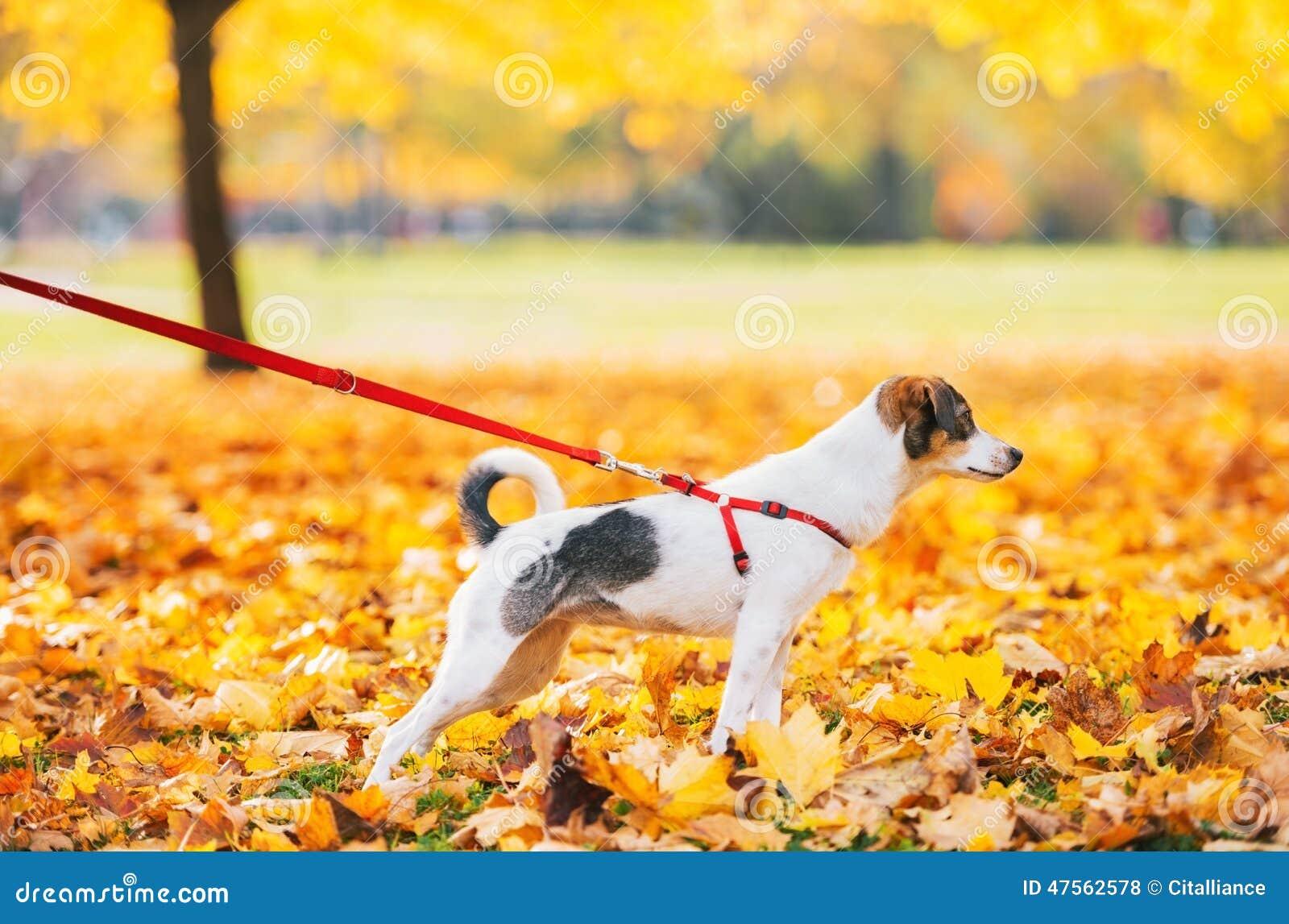 Nahaufnahme auf Hund auf Leine draußen