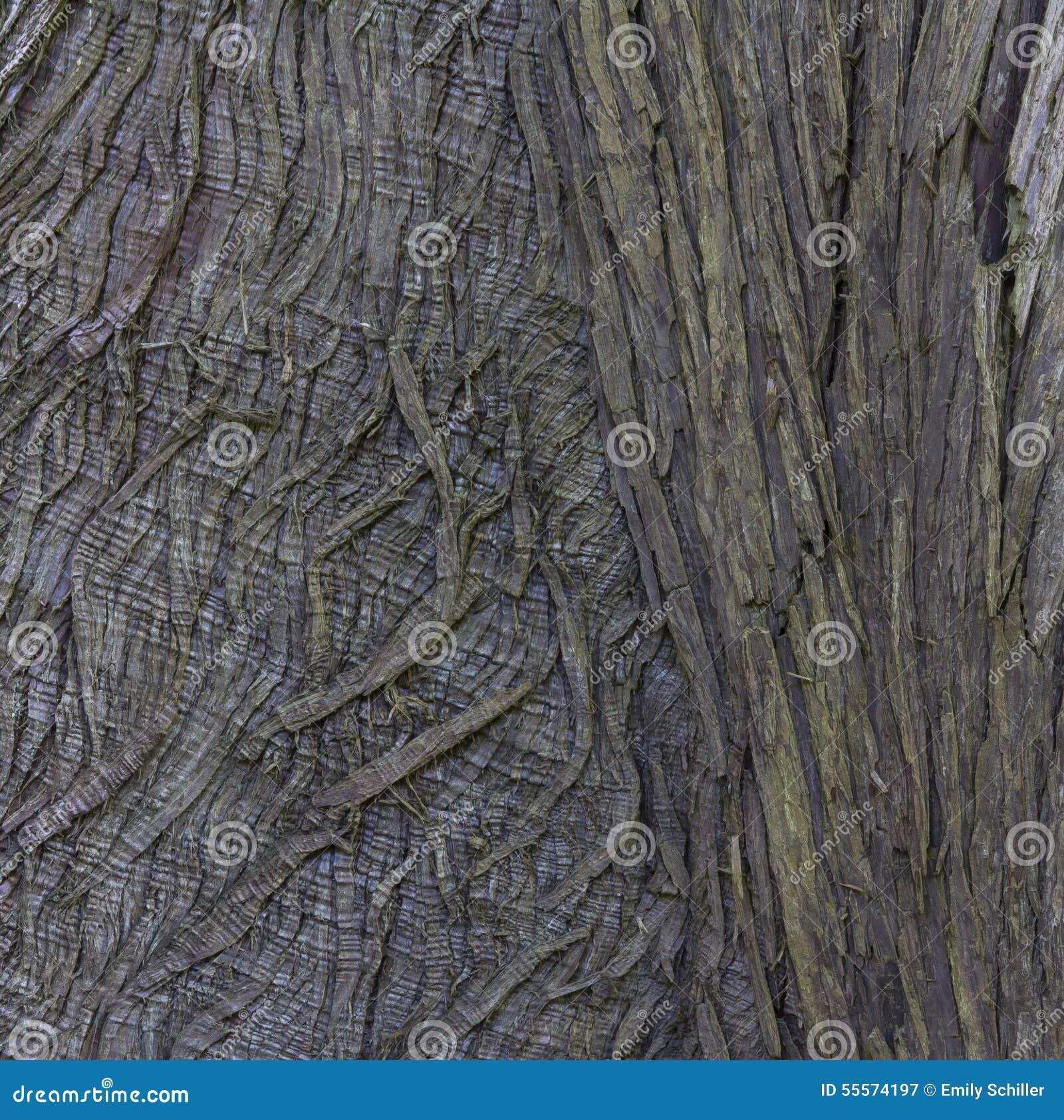 Nahaufnahme der Baumrinde für abstrakten strukturierten Hintergrund