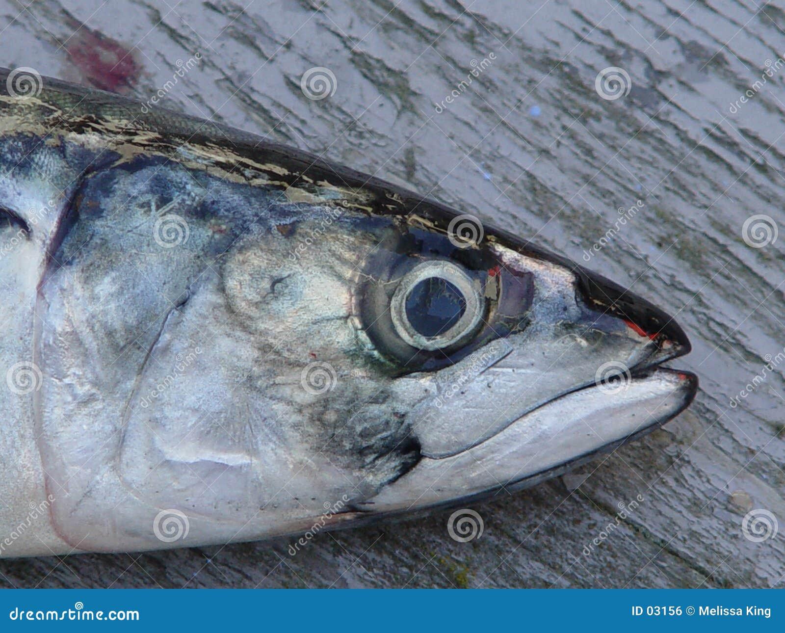Nahaufnahme der Fische an Bord