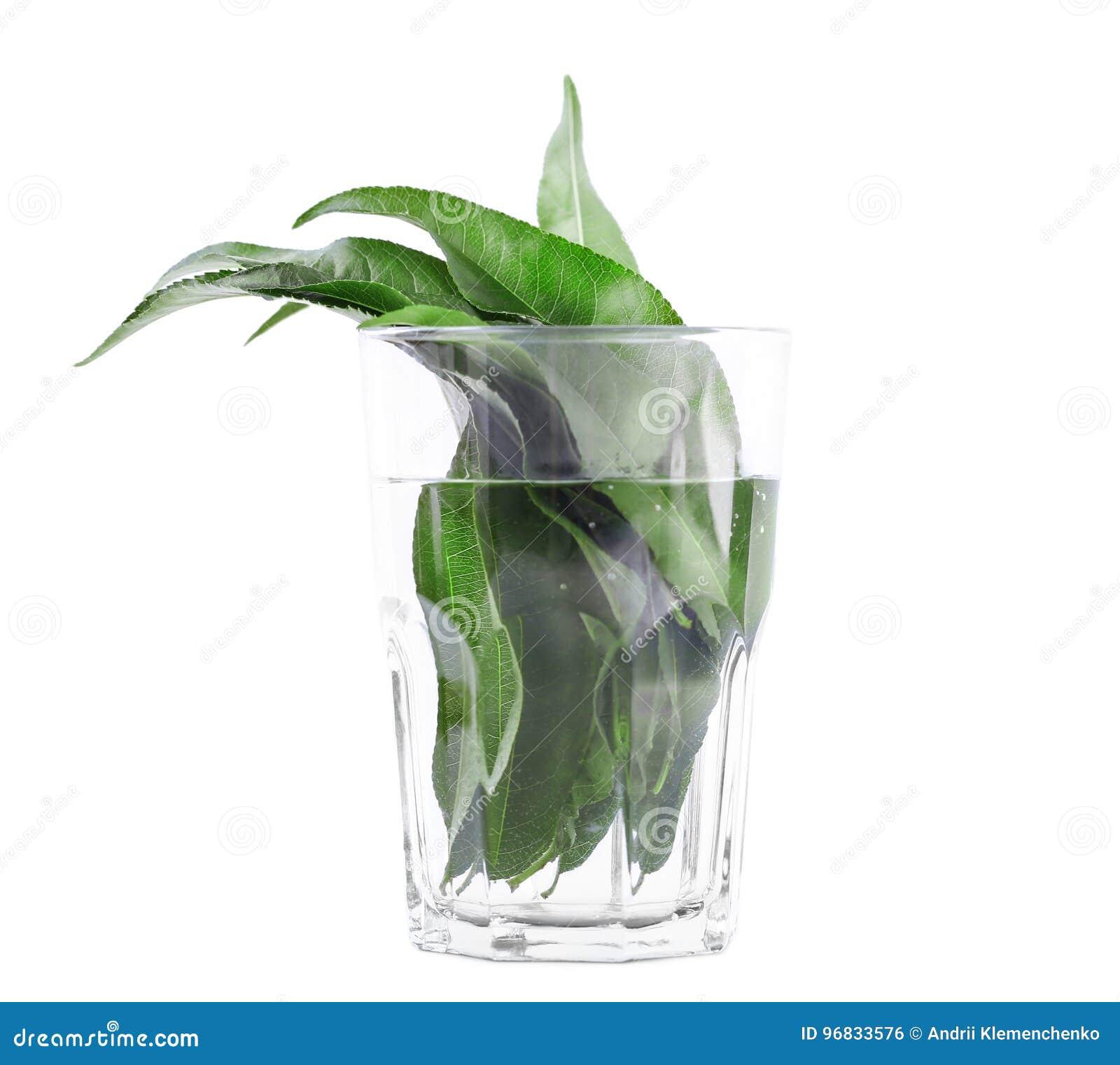 Nahaufnahme der grünen Zitrusfrucht verlässt im transparenten Glas, das vom Wasser voll ist Helle frische Blätter, lokalisiert au