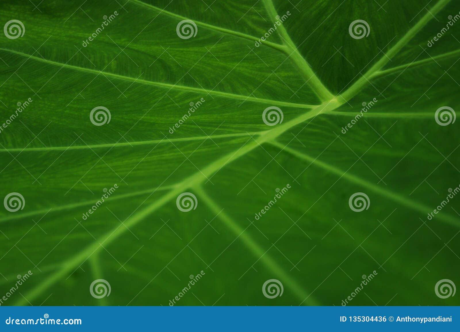 Nahaufnahme der Strukturen eines grünen Blattes