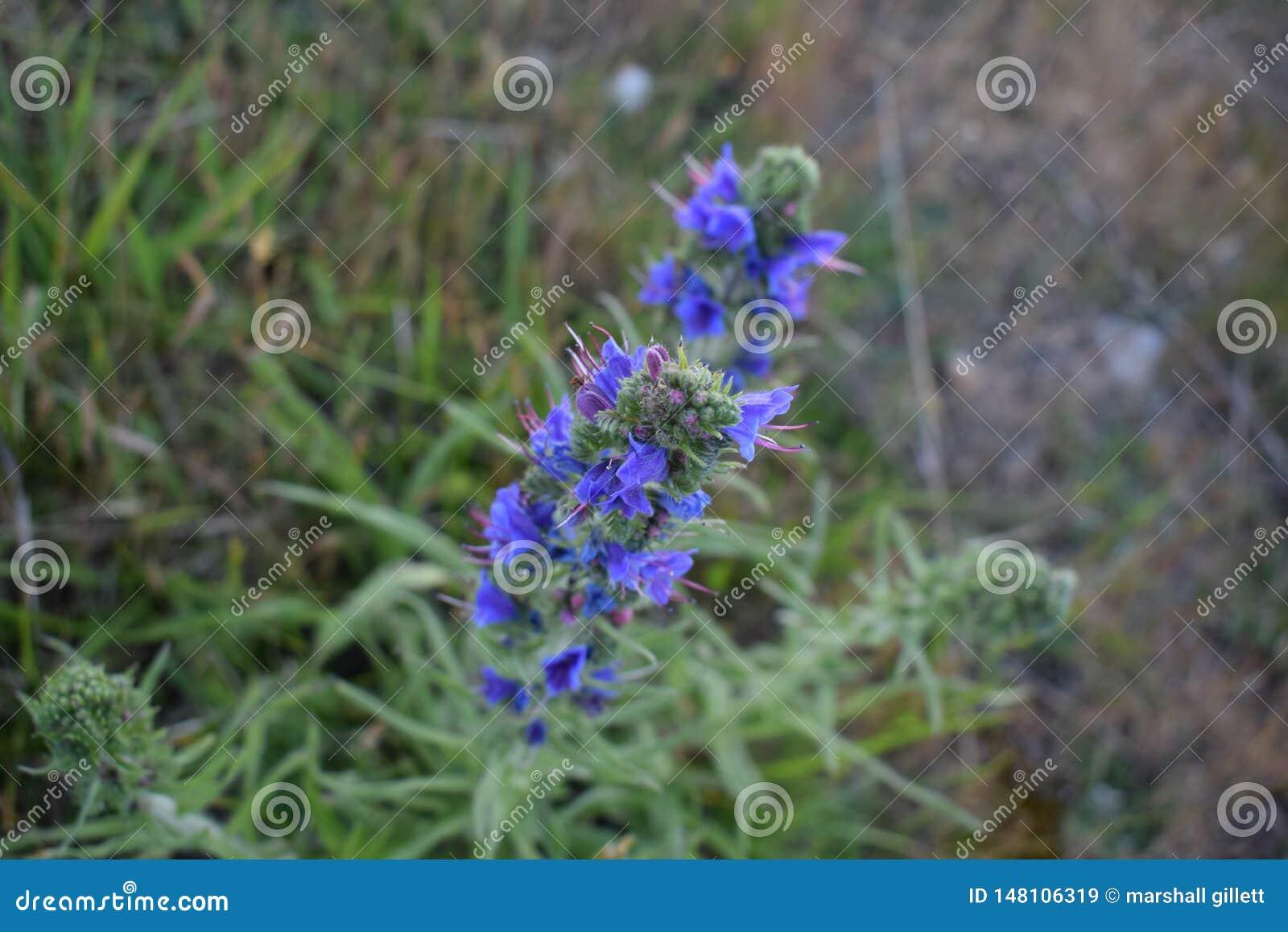 Nahaufnahme einer Blume in Kent-Landschaft