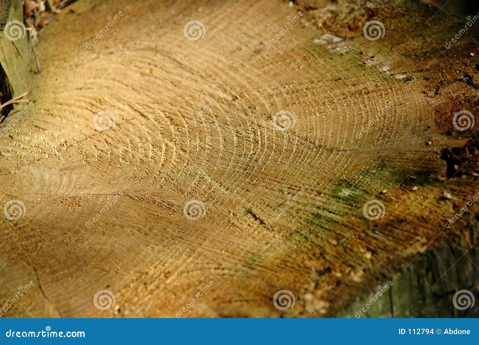 Nahaufnahme eines gefällten Baums