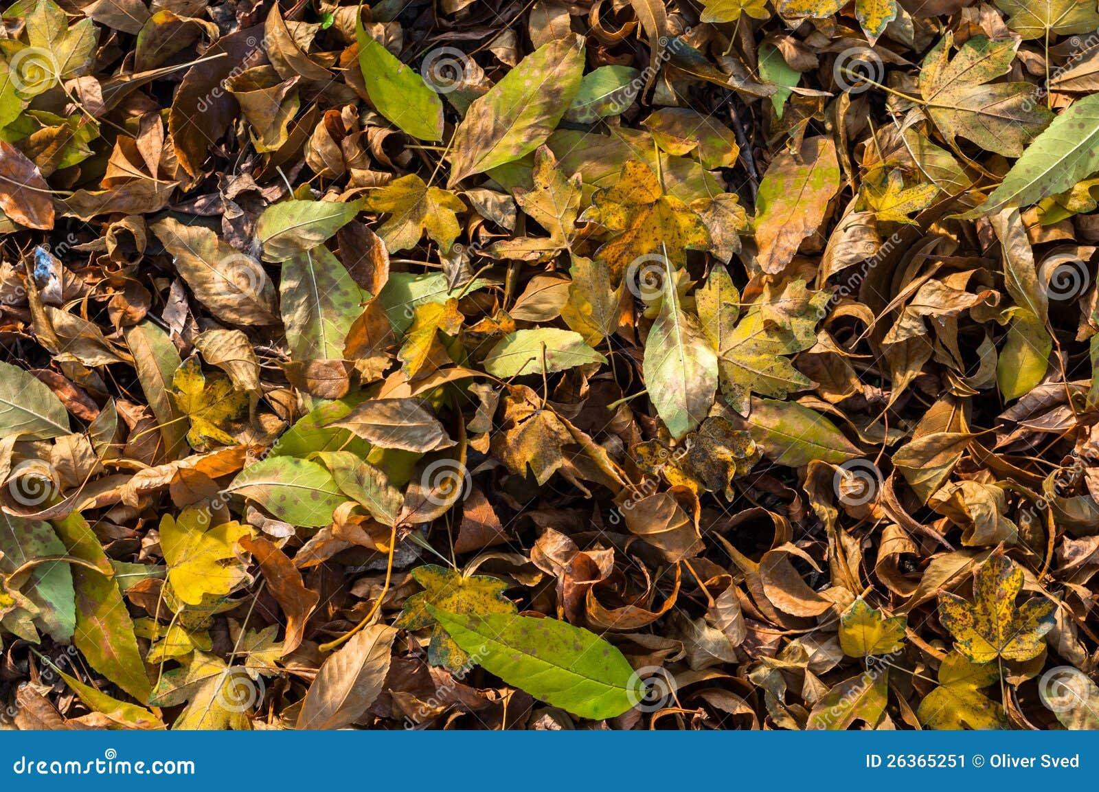 Nahaufnahme einiger herbstlicher Blätter