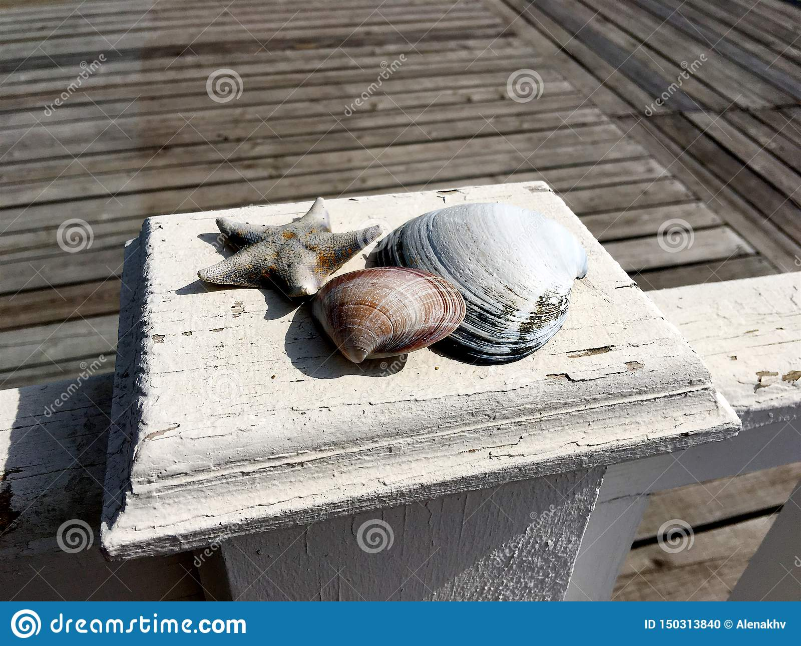 Nahaufnahme von Muscheln und eine trockene Starfishlüge auf einer hölzernen weißen Hecke