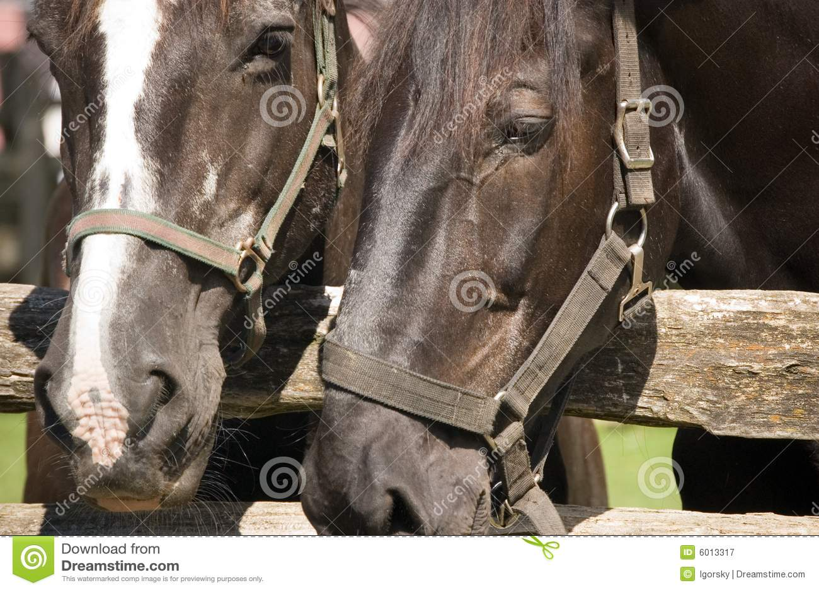 Nahaufnahme von zwei Pferden