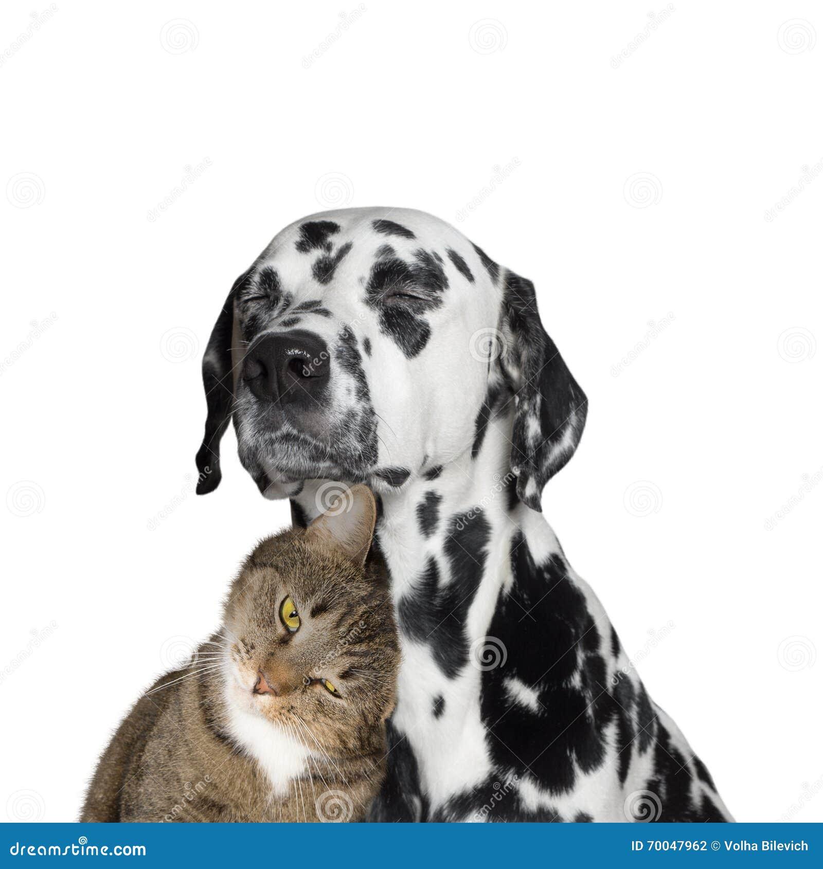 Nahe Freundschaft zwischen einer Katze und einem Hund
