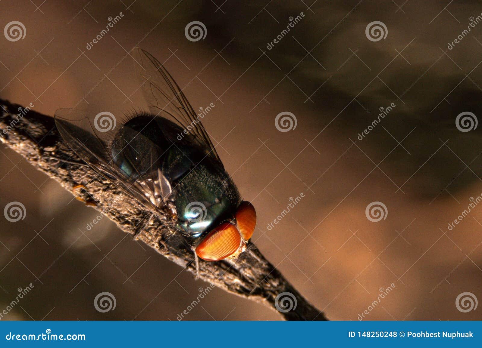 Nahe hohe Fliege auf dem schmutzigen Seil innerhalb des Hauses auf der R?ckseite des bokeh