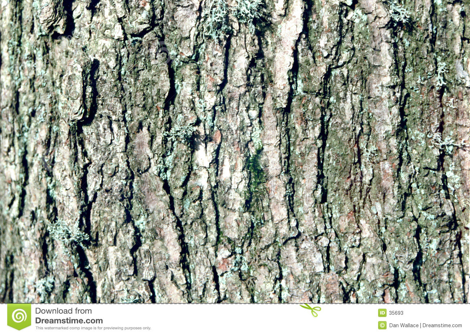 Nahes hohes des Baums