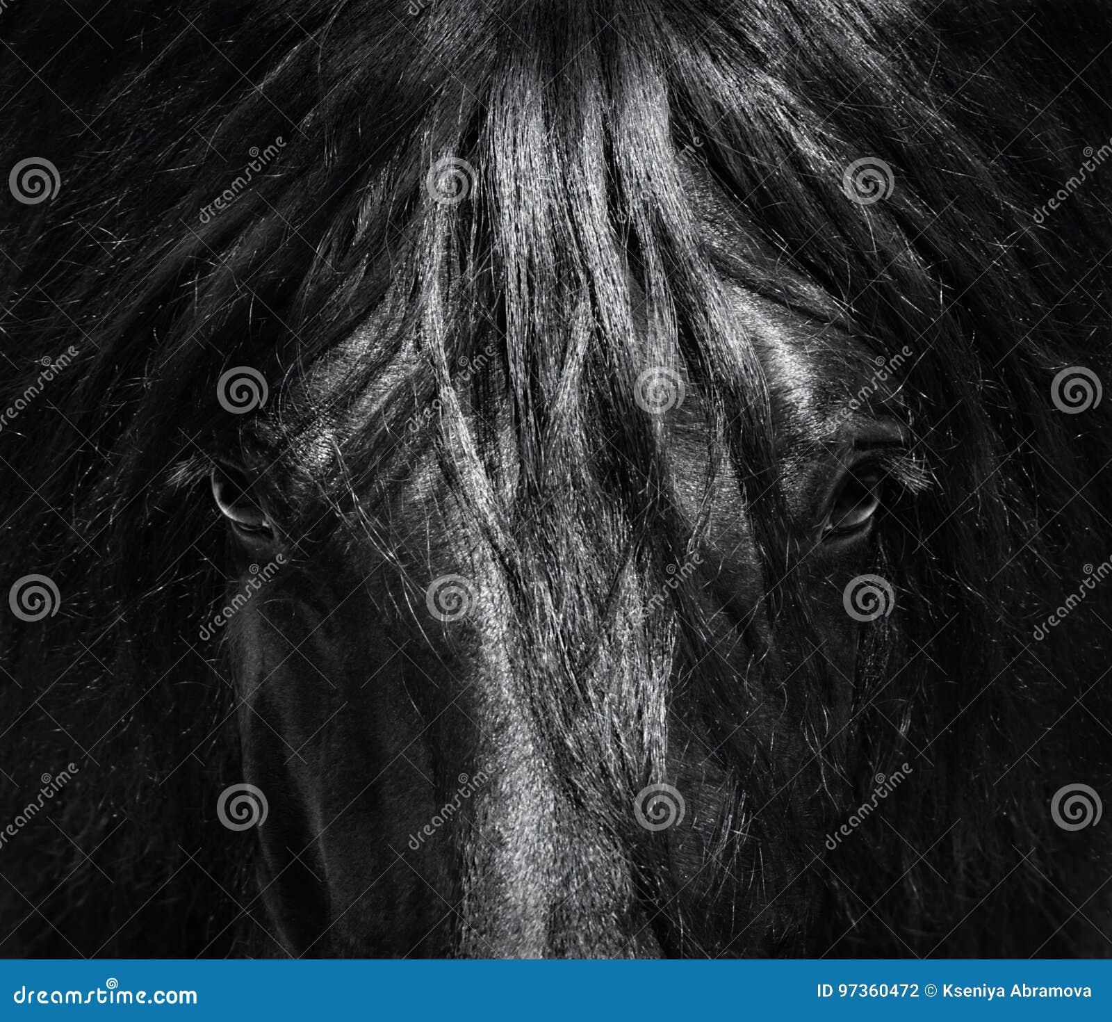 Nahes hohes spanisches reinrassiges Pferd des Porträts mit der langen Mähne