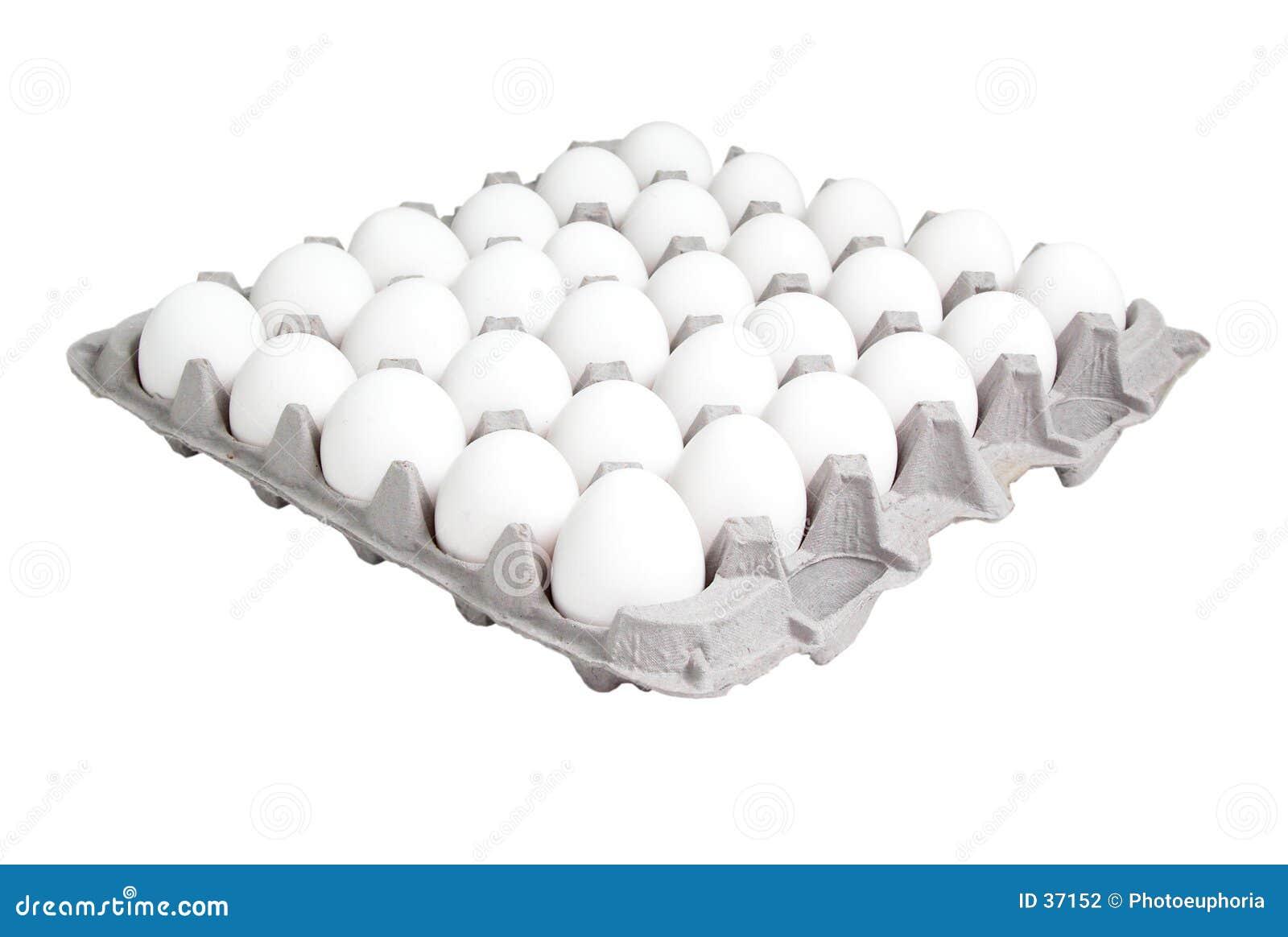 Nahrung: 24 Zählimpuls-Karton Eier