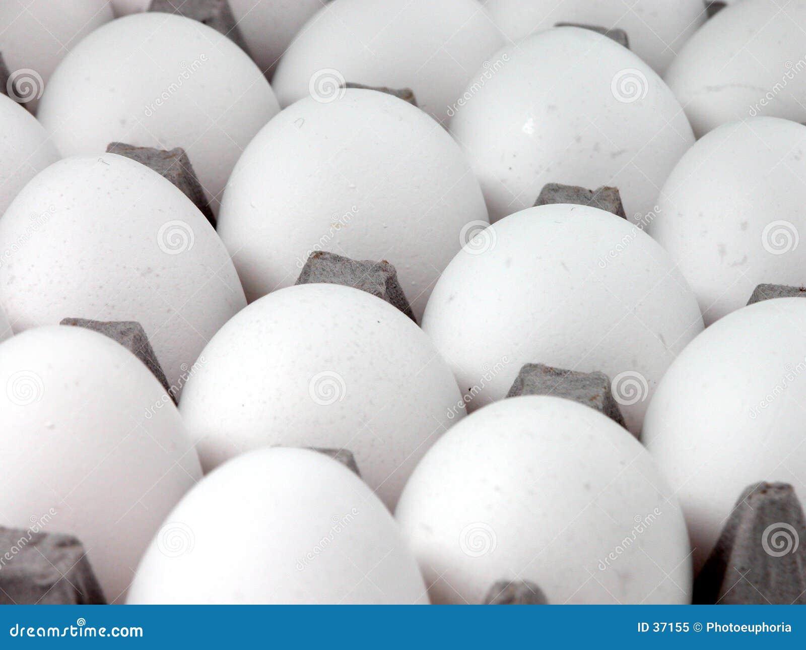 Nahrung: Eier