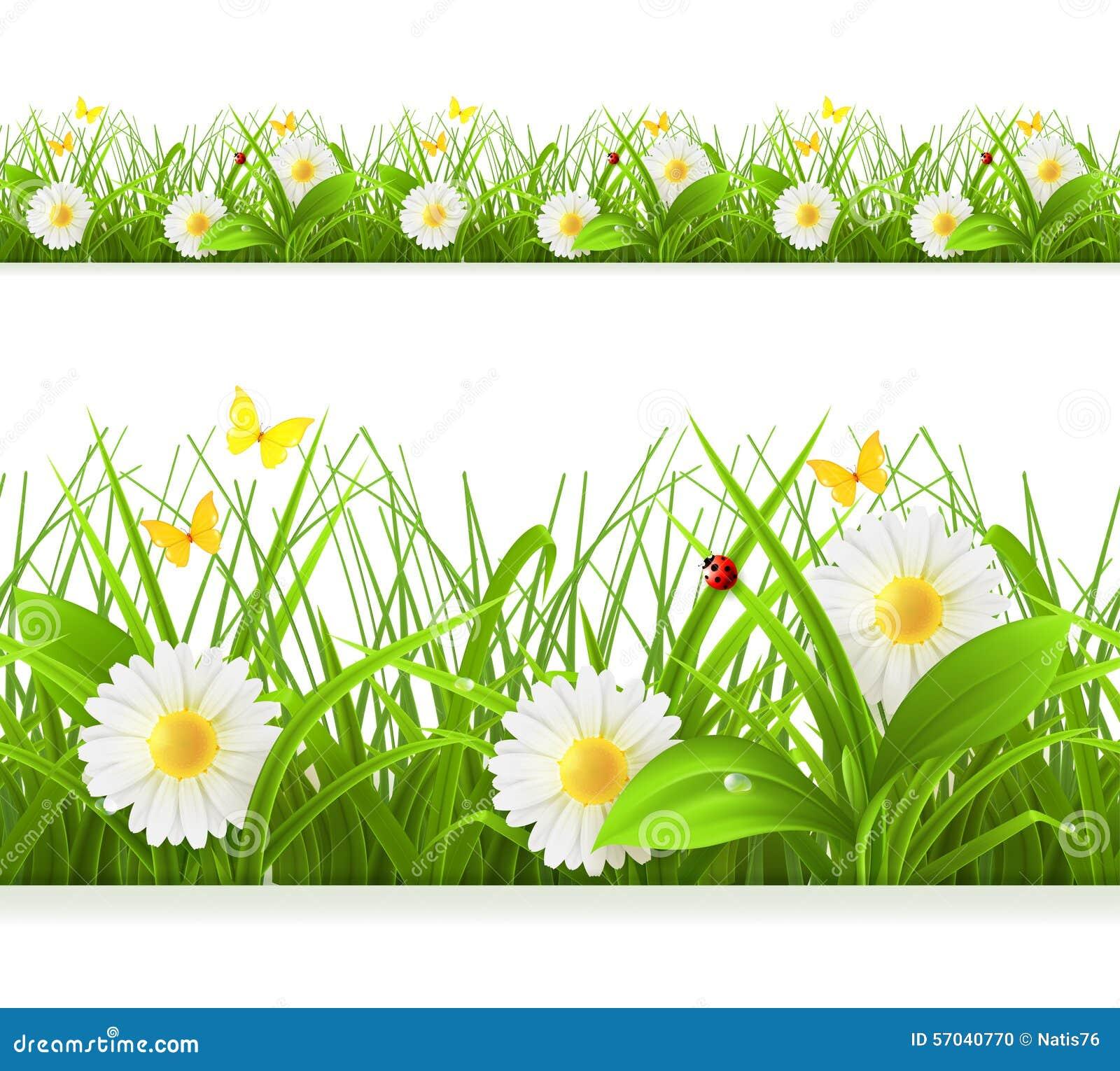 Nahtlose Grenze des grünen Grases des Frühlinges