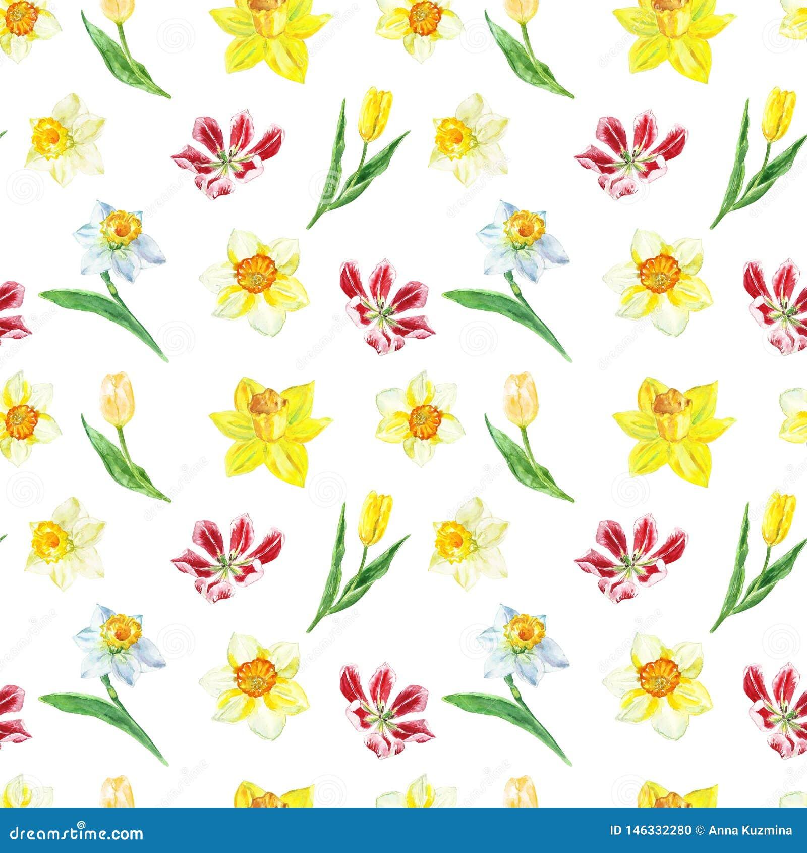 Nahtloses mit Blumenmuster des Aquarells mit gelber Narzisse und Tulpen auf weißem Hintergrund Heller botanischer Druck