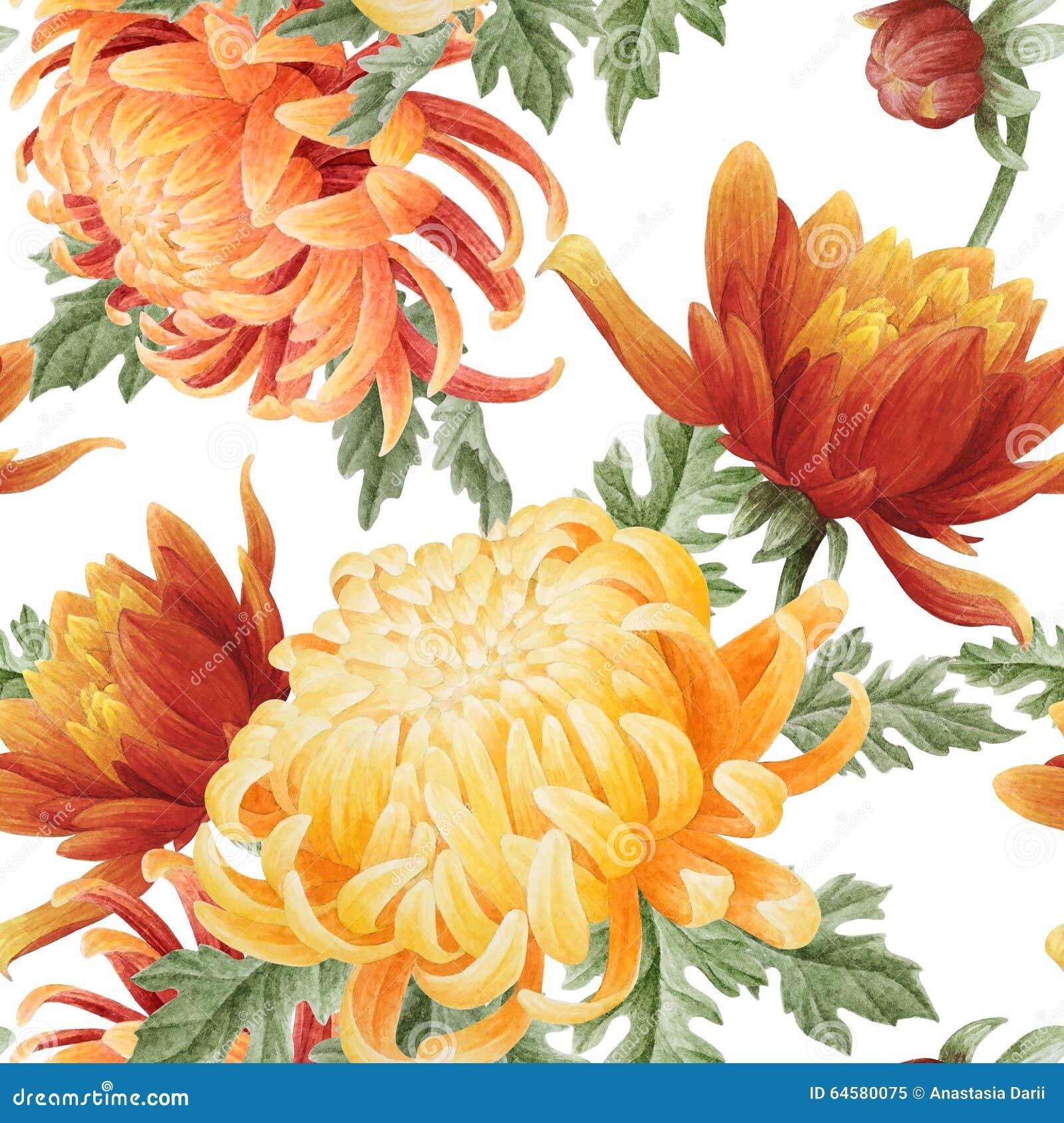 Nahtloses Muster des Aquarells mit Chrysantheme
