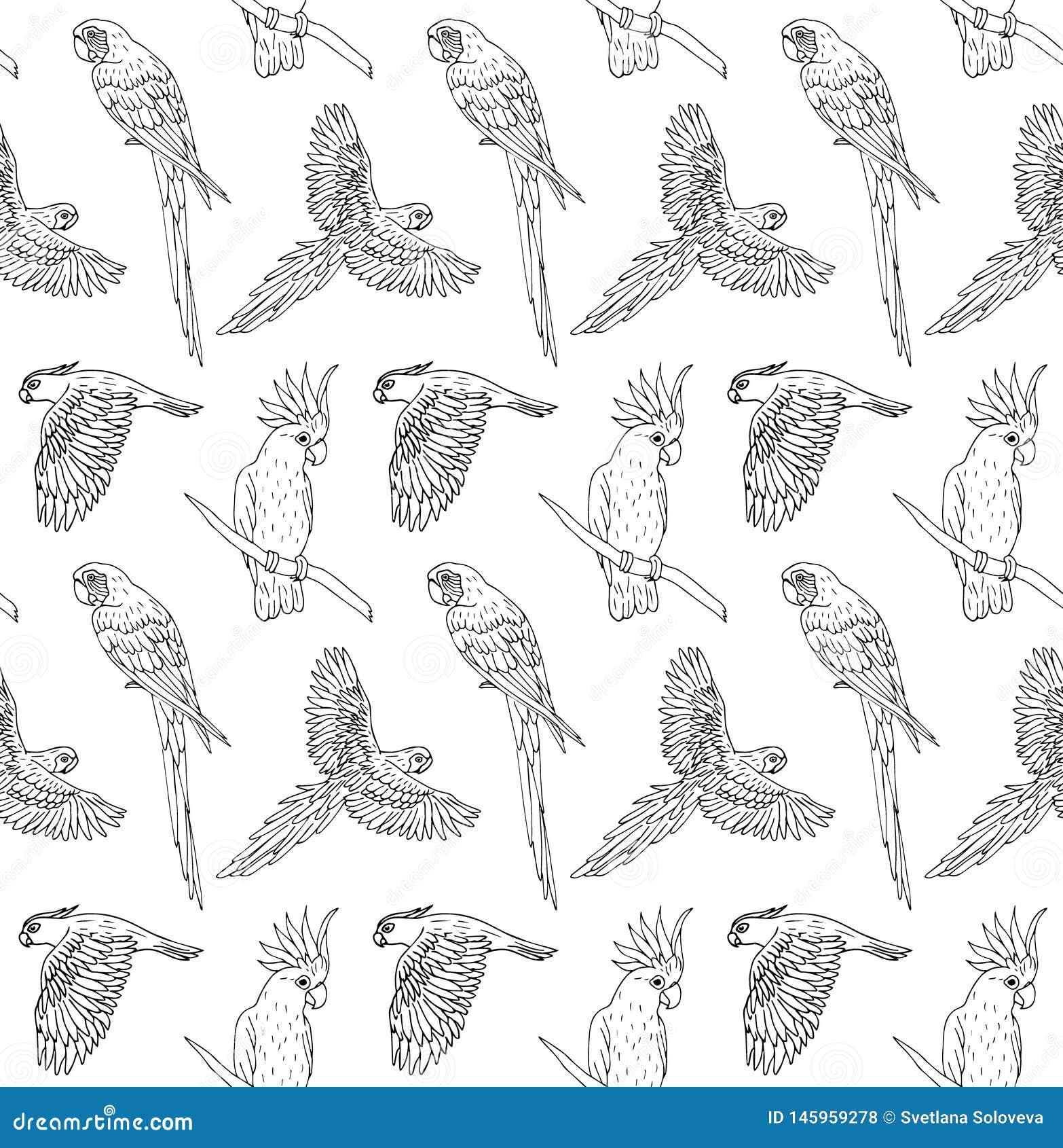 Nahtloses Muster des Vektors der schwarzen Tintenlinie Handgezogenes Papageienfliegen und Sitzen auf weißem Hintergrund