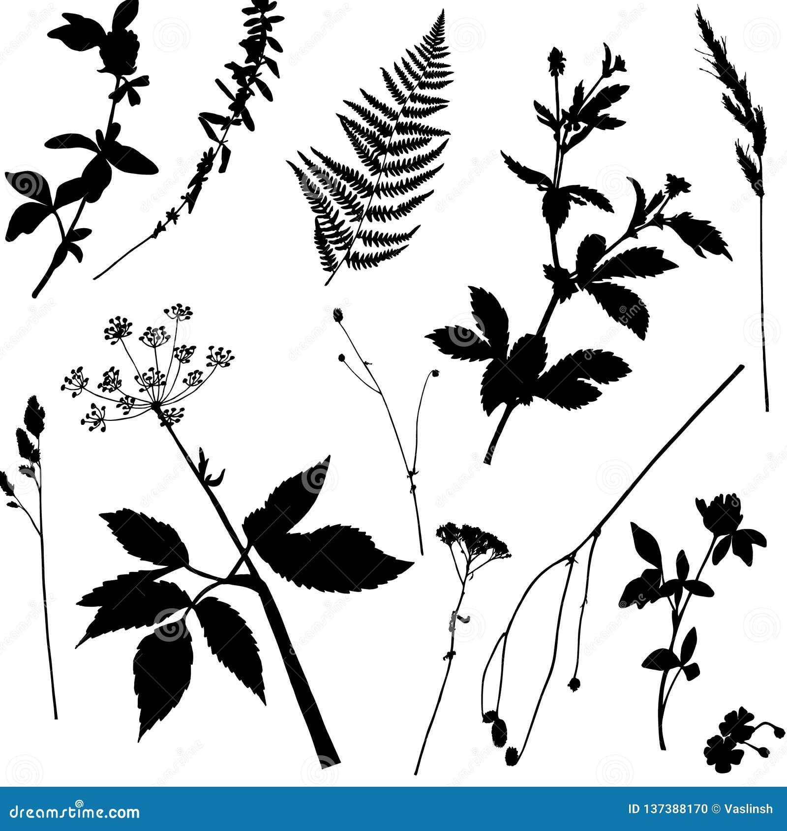 Nahtloses Muster des Vektors mit schwarzen wild wachsenden Pflanzen
