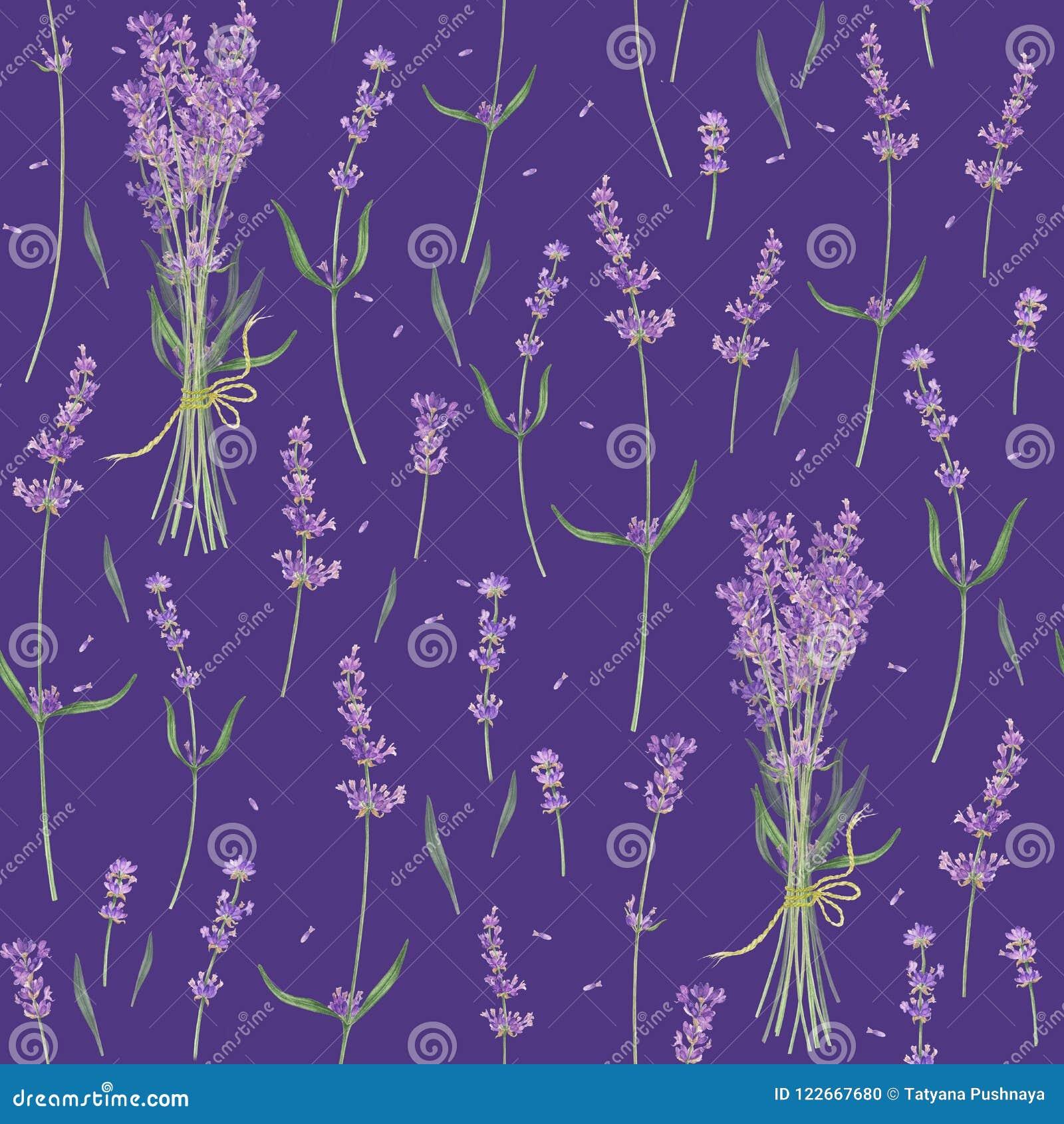 Nahtloses Muster mit Blättern und Blumen des Lavendels, Aquarellmalerei