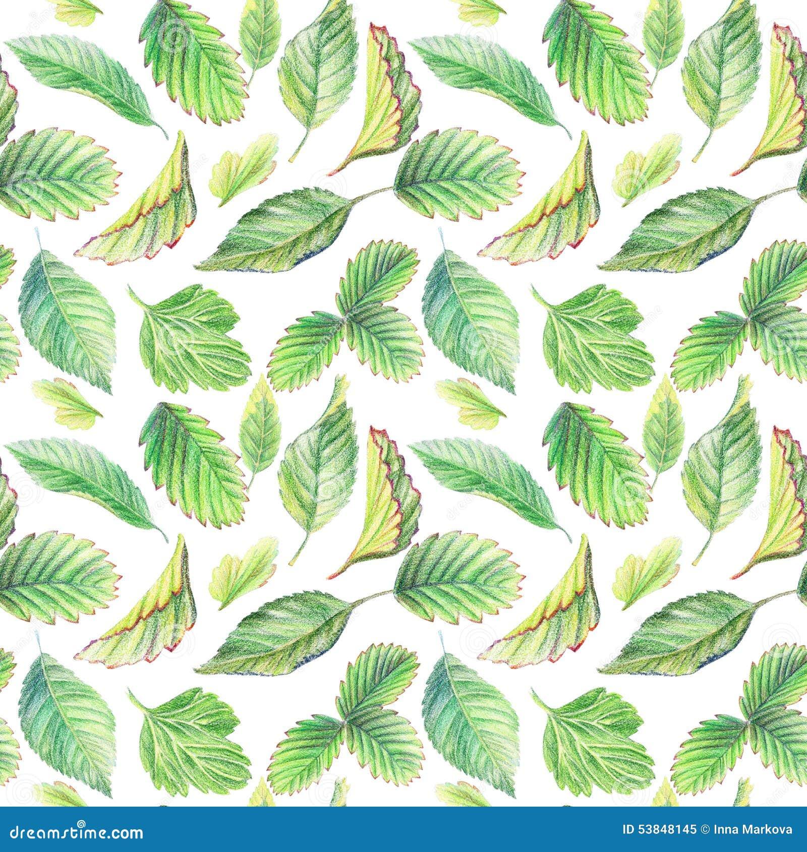Nahtloses Muster Mit Blättern Zeichnen Mit Farbigen Bleistiften
