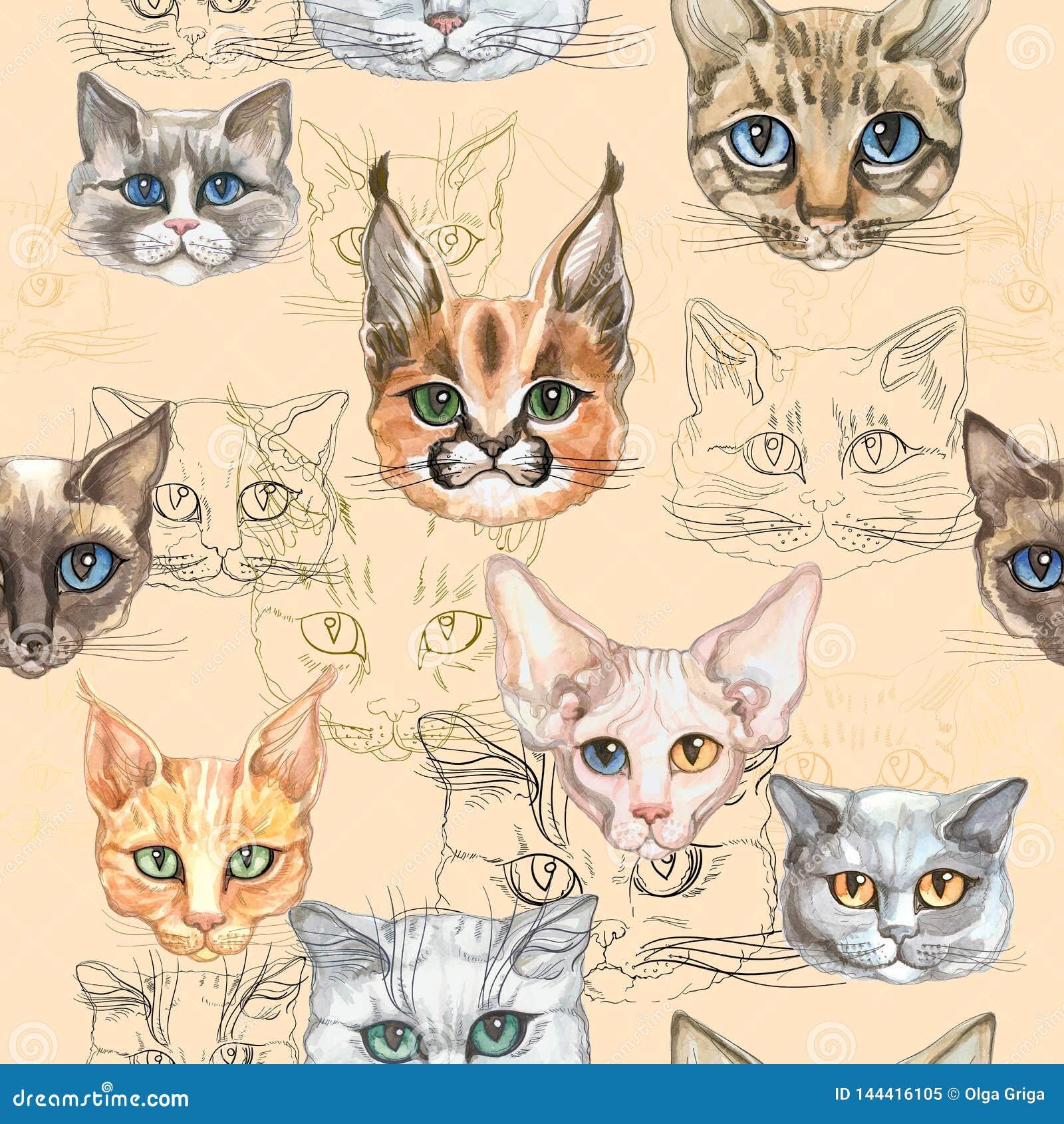 nahtloses muster mit katzen der unterschiedlichen zucht