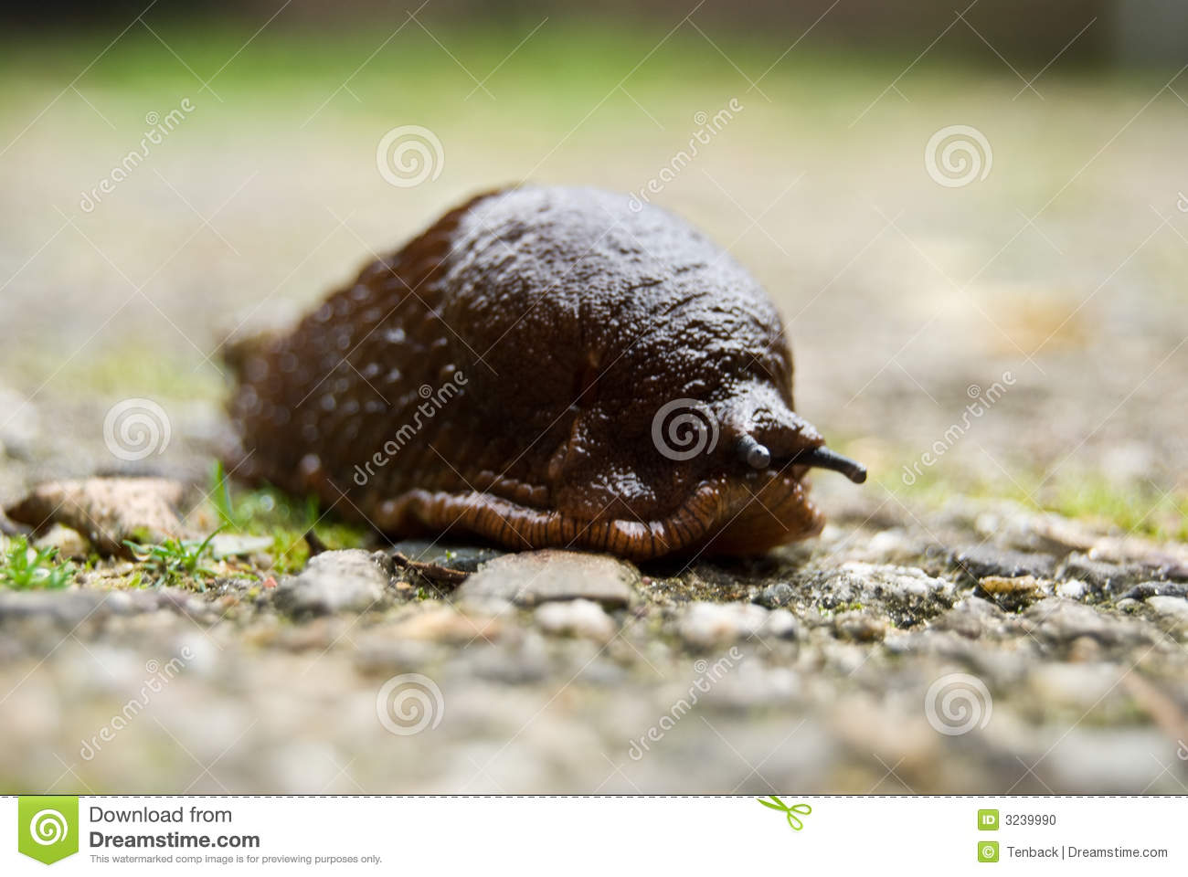 Naked Snail on the road stock photo. Image of naked