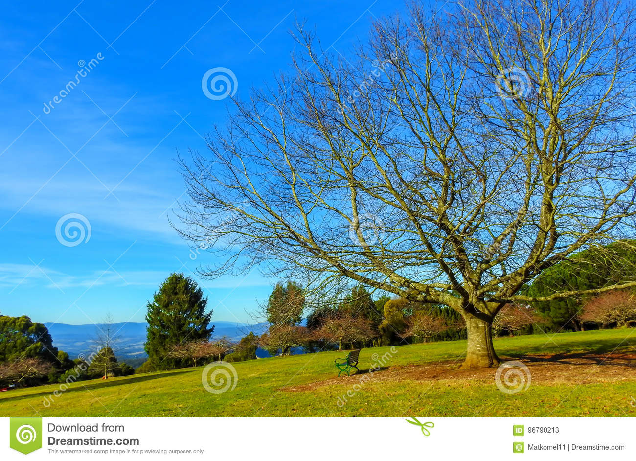 Naked Tree And Bench On Warm Autumn Day Stock Image