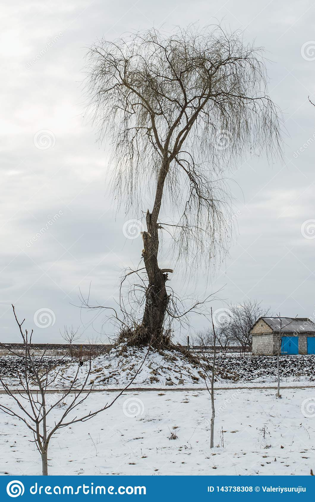 Naked Tree In Winter Season Stock Photo - Image of leaf