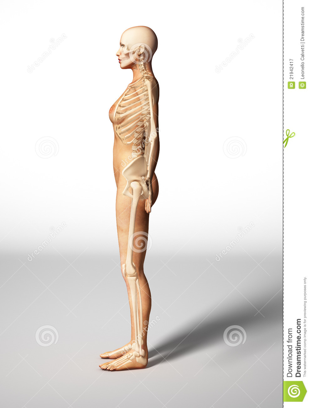 Woman Skeleton Nude 87