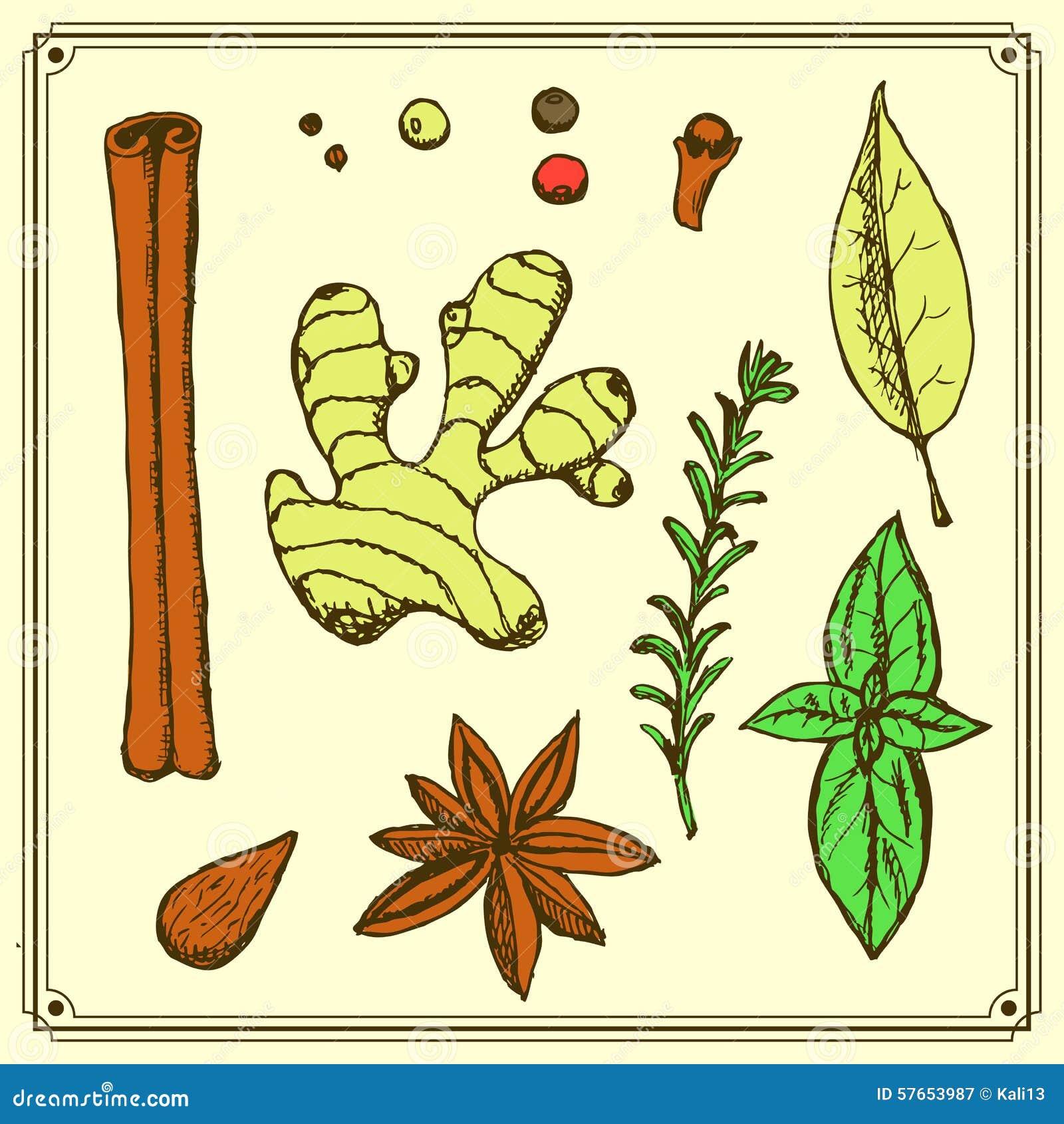 Nakreśleń ziele w rocznika stylu i pikantność