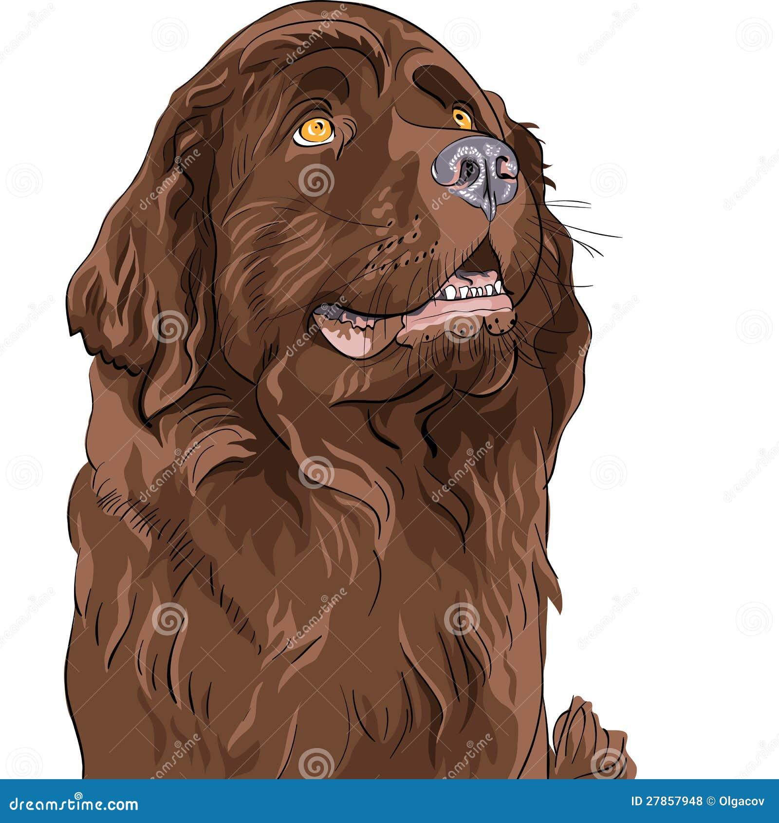 Nakreślenia psi Wodołazu ogara trakenu obsiadanie