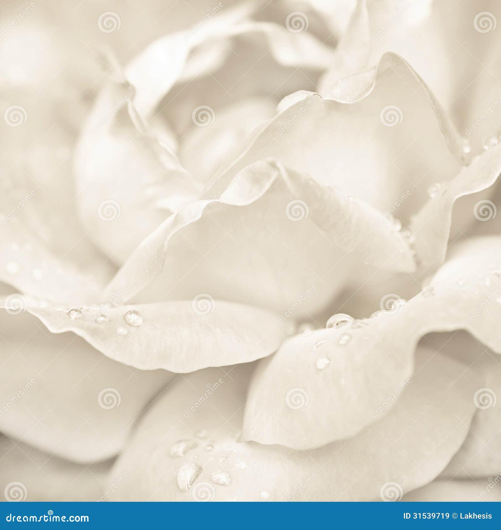 Nam bloem met regendalingen toe