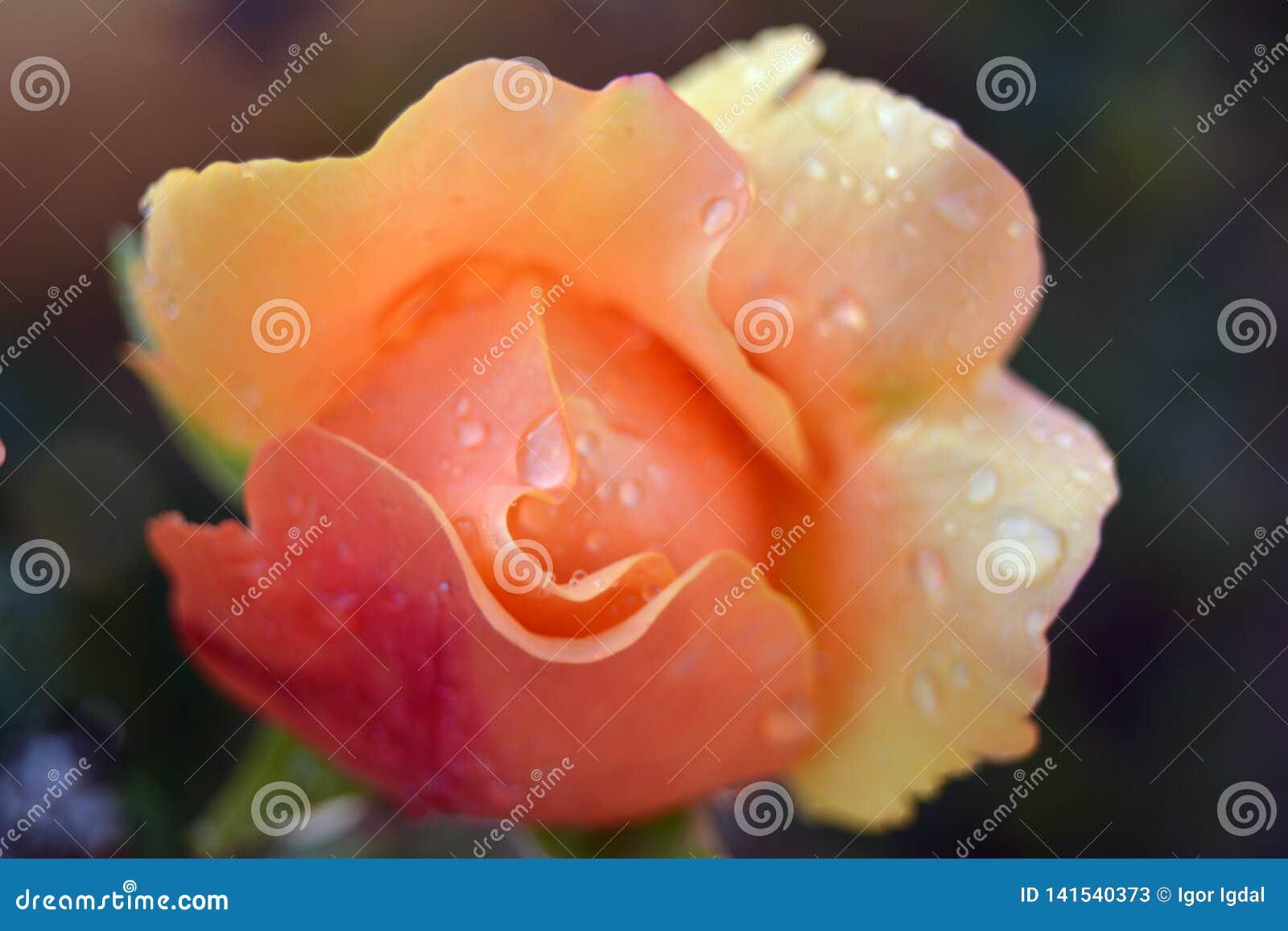 Nam in de vorm van een smiley toe - het glimlachen gezicht