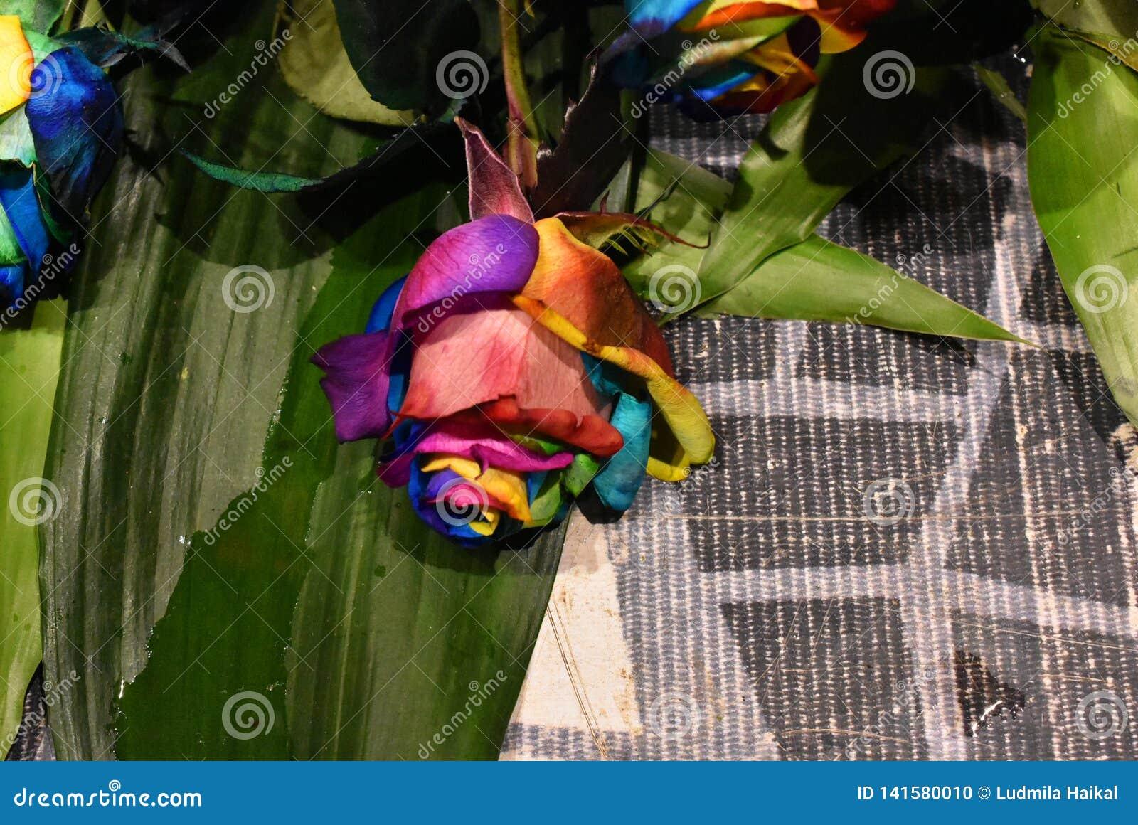 Nam installatie, multicolored bloem van Holambra Brazilië toe