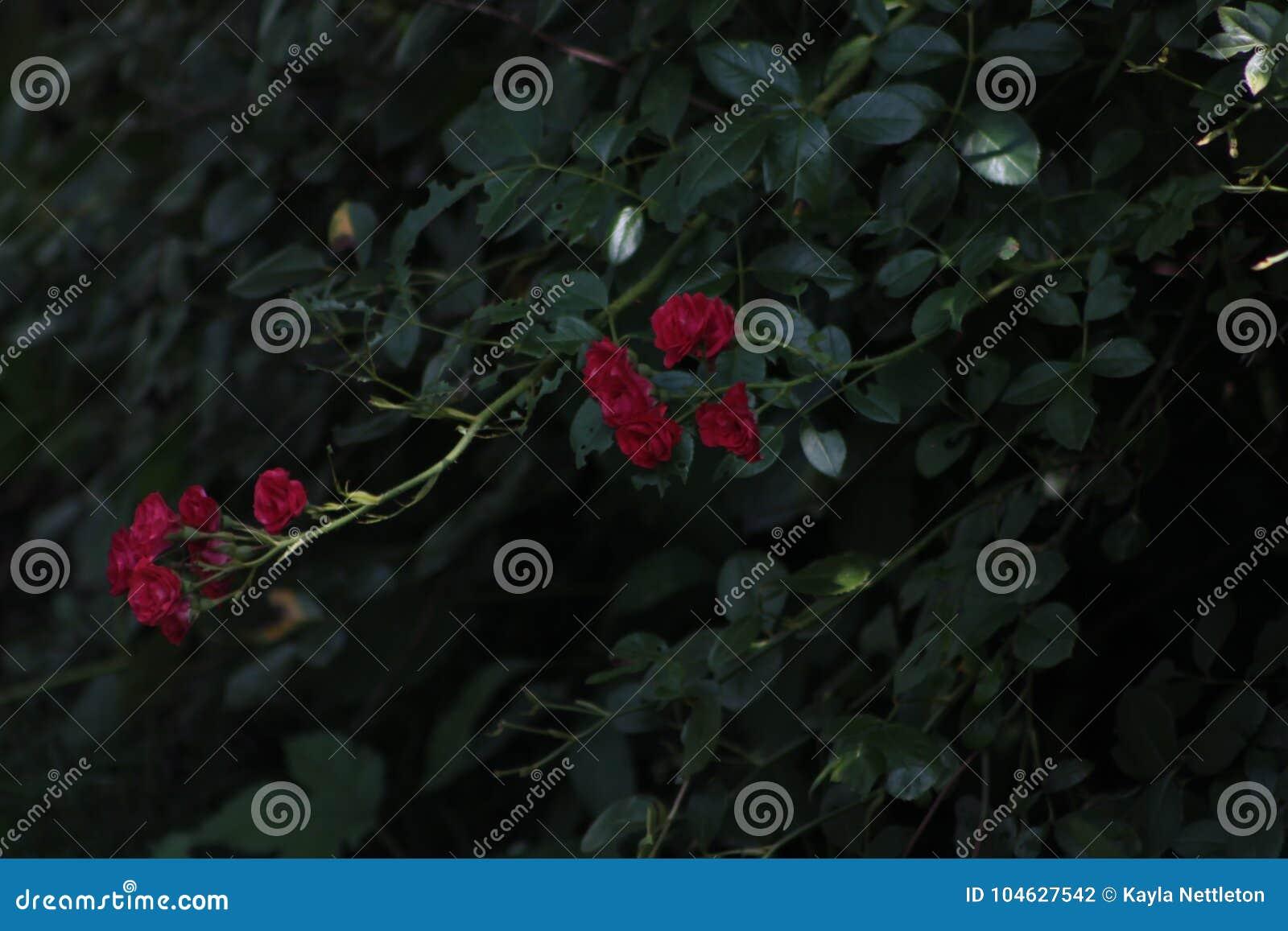 Download Nam Struik In Mijn Binnenplaats Toe Stock Foto - Afbeelding bestaande uit backyard, peaking: 104627542