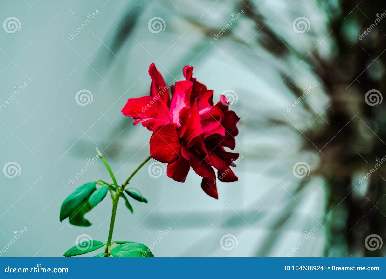 Download Nam toe stock foto. Afbeelding bestaande uit rose, shining - 104638924