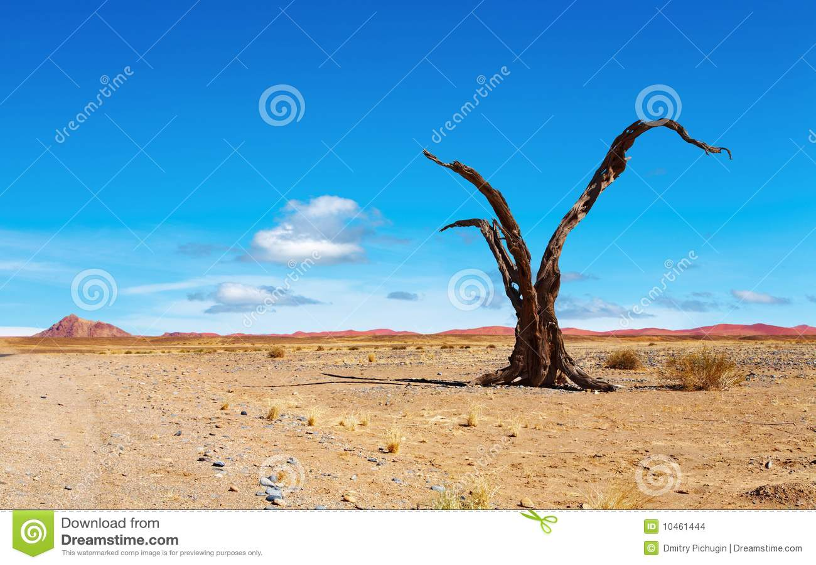 Namib пустыни