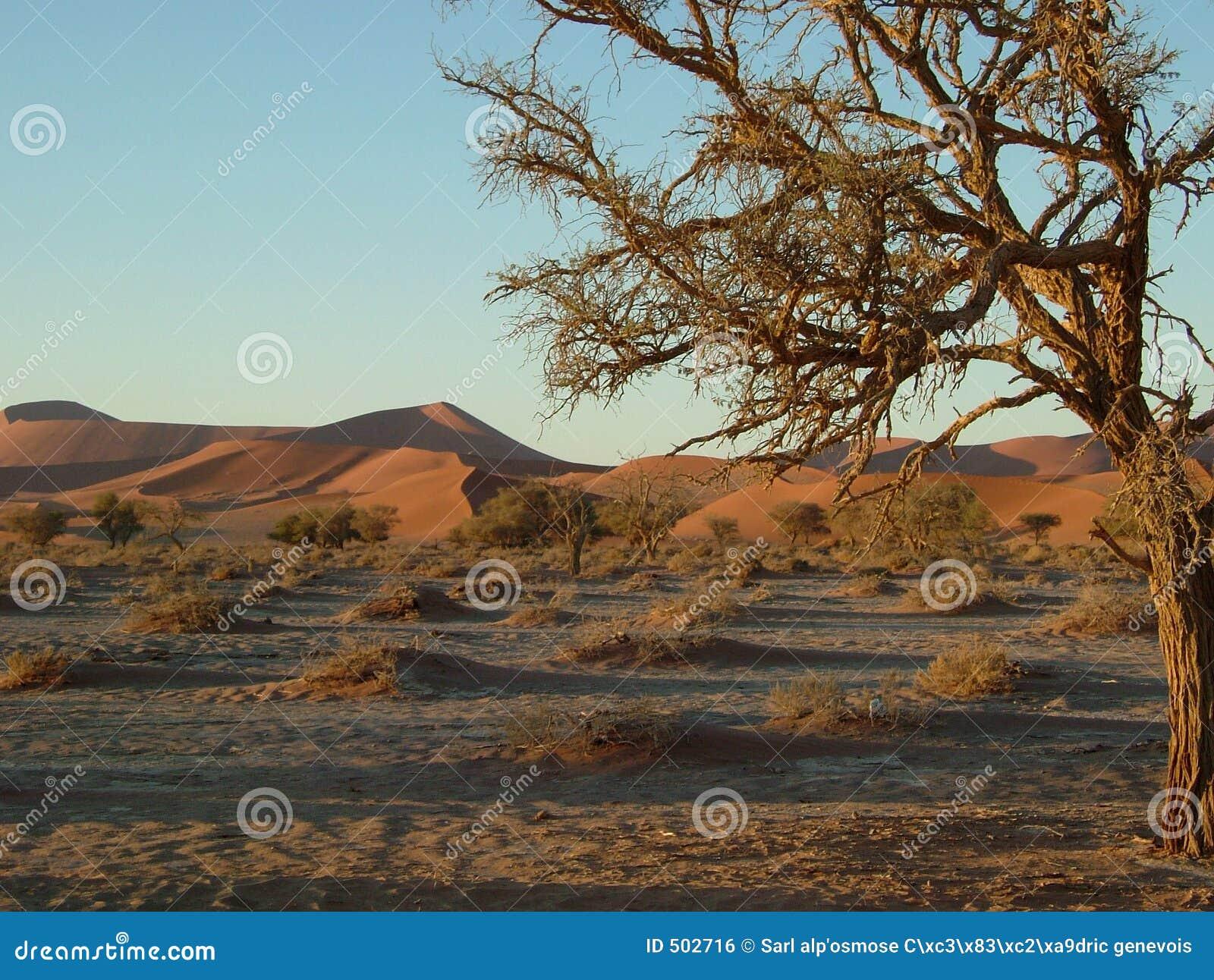 Namib för 04 öken