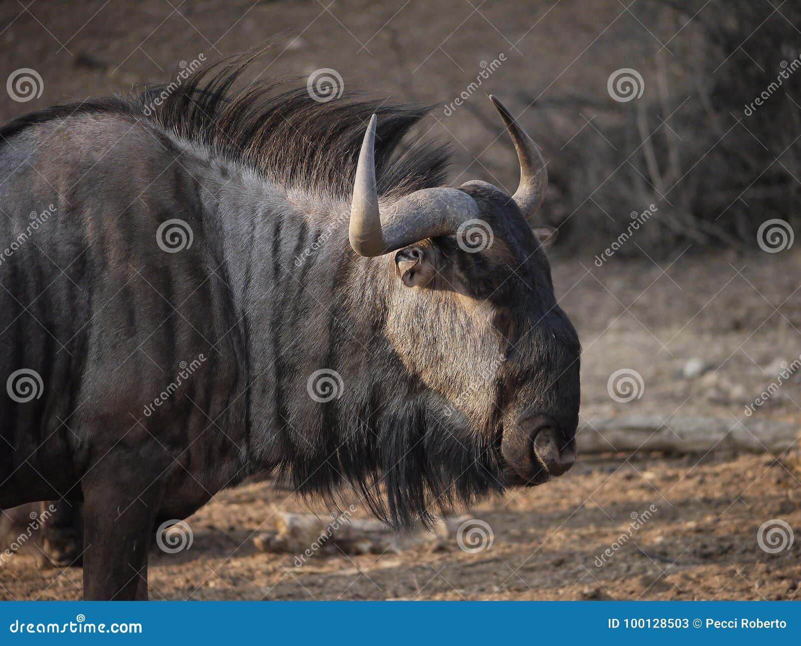 Namibia, Damaraland, Etosha park