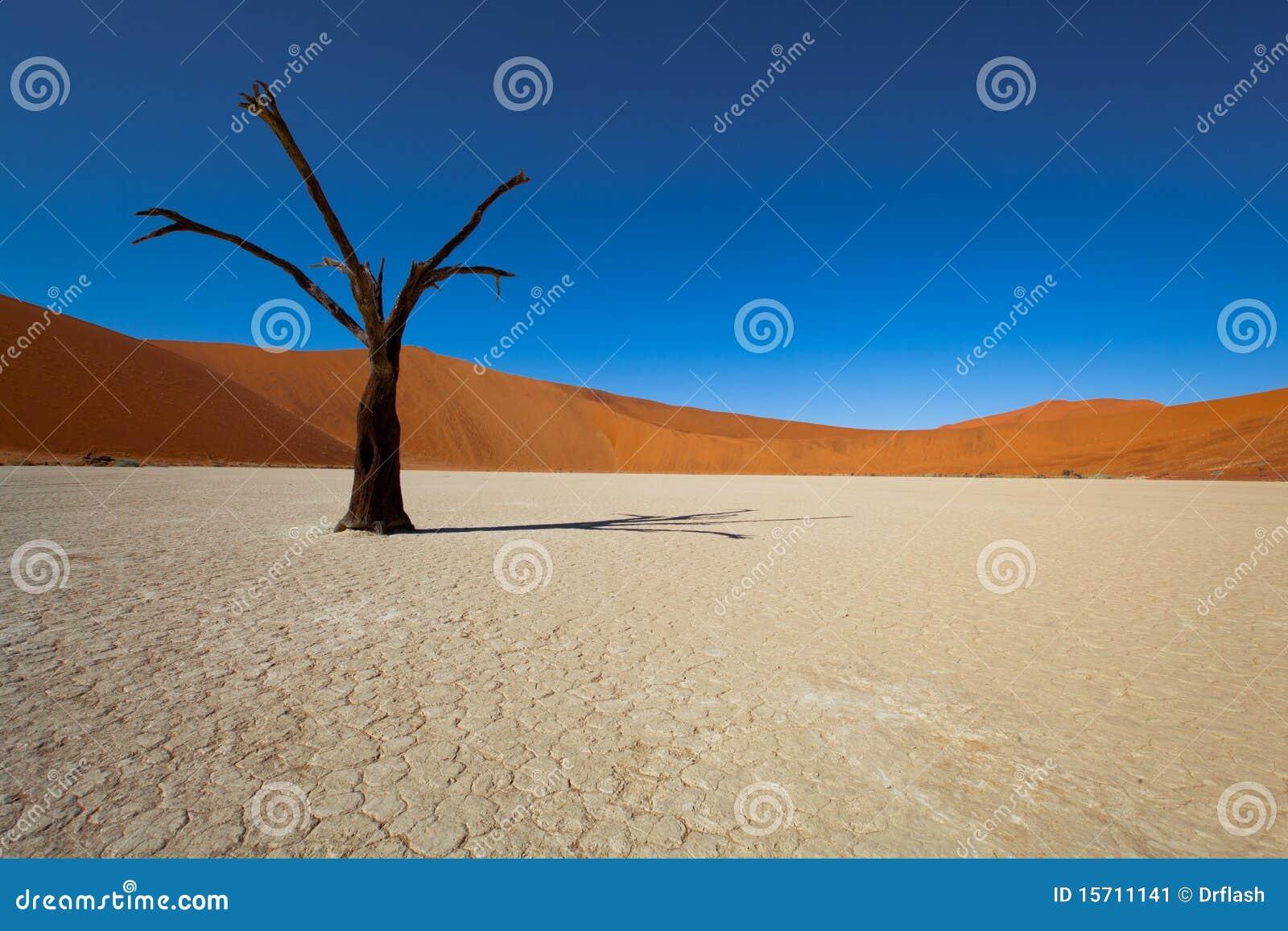 Namibia-Wüste