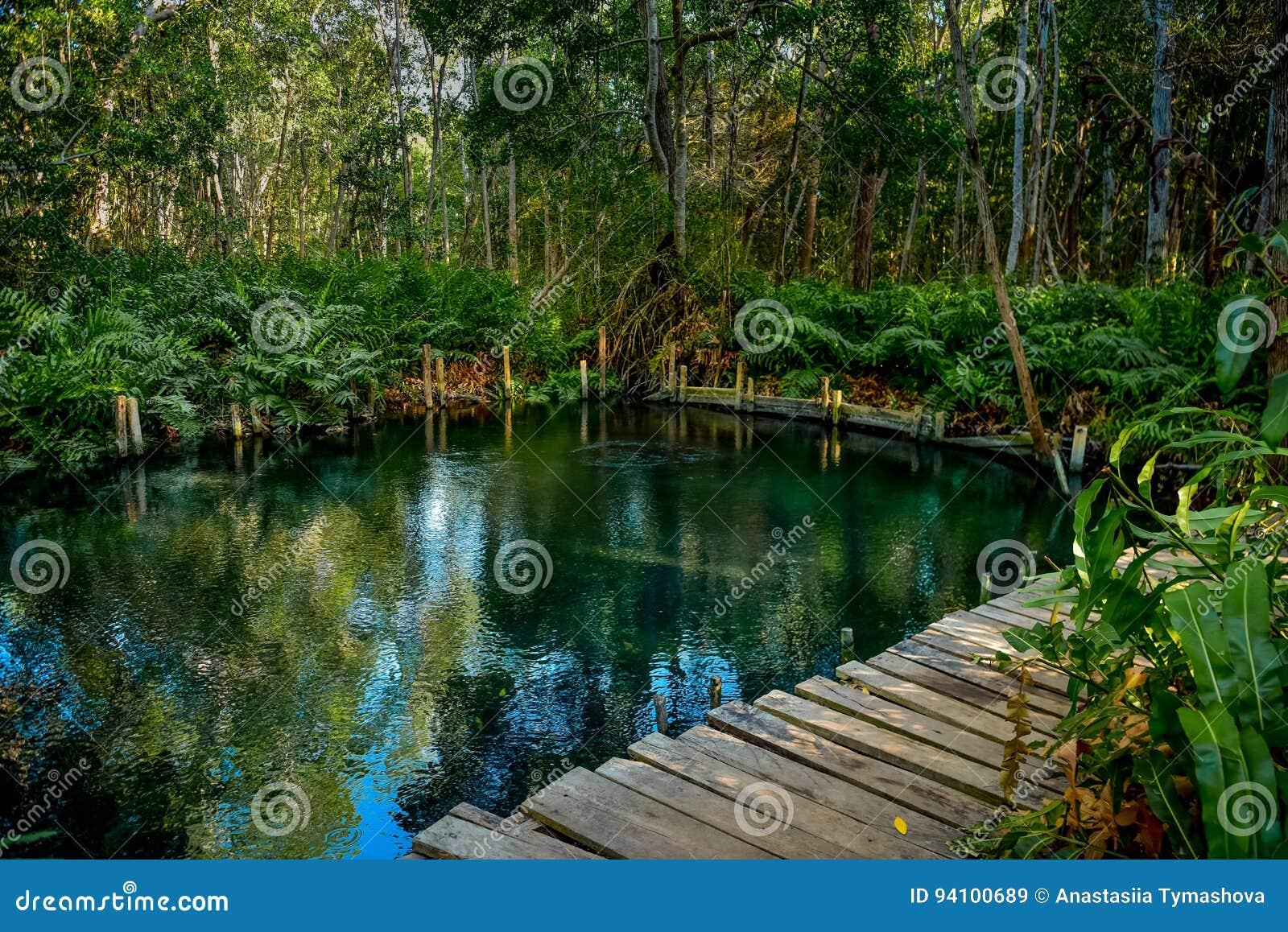 Namorzynowy las Ria Celestun jeziorem
