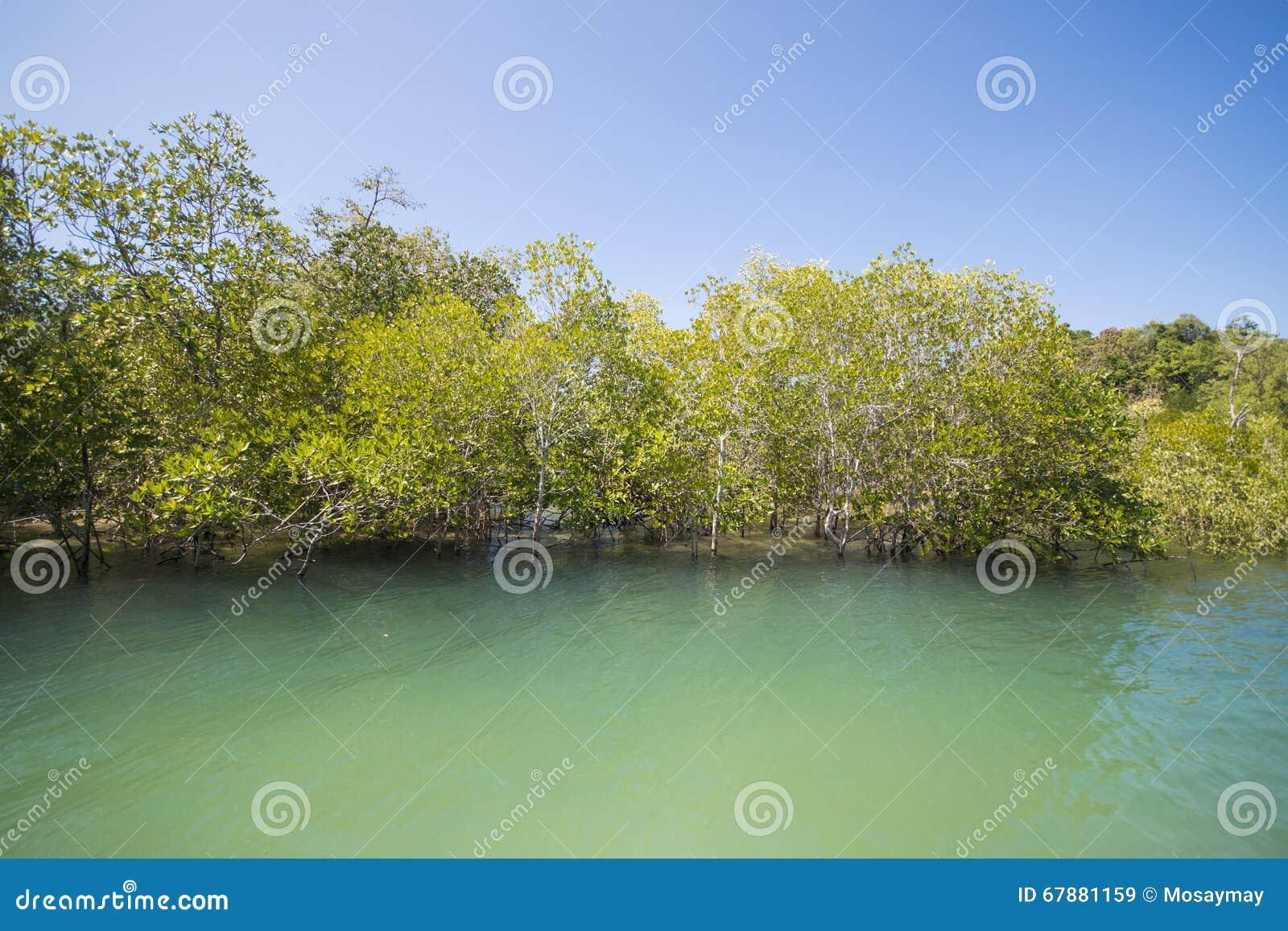 Namorzynowy lasowy tropikalny tropikalny las deszczowy