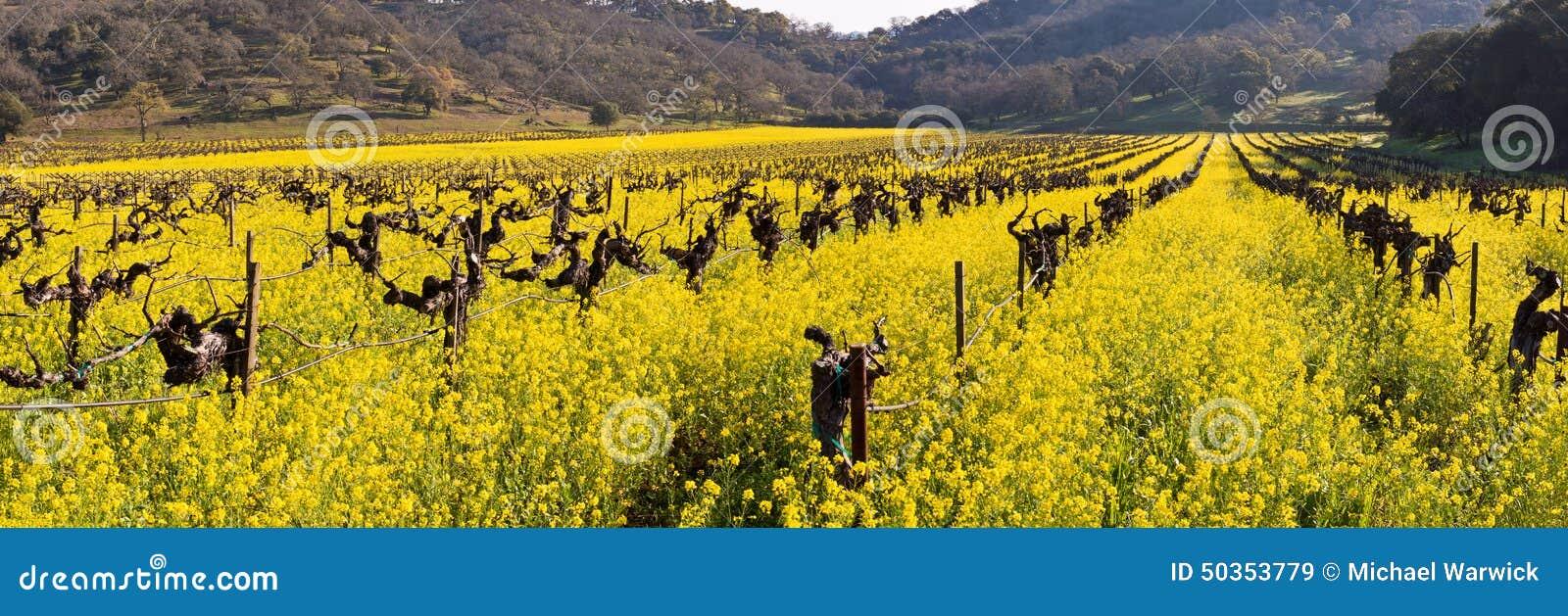 Napa Valley Vineyards And Spring Mustard